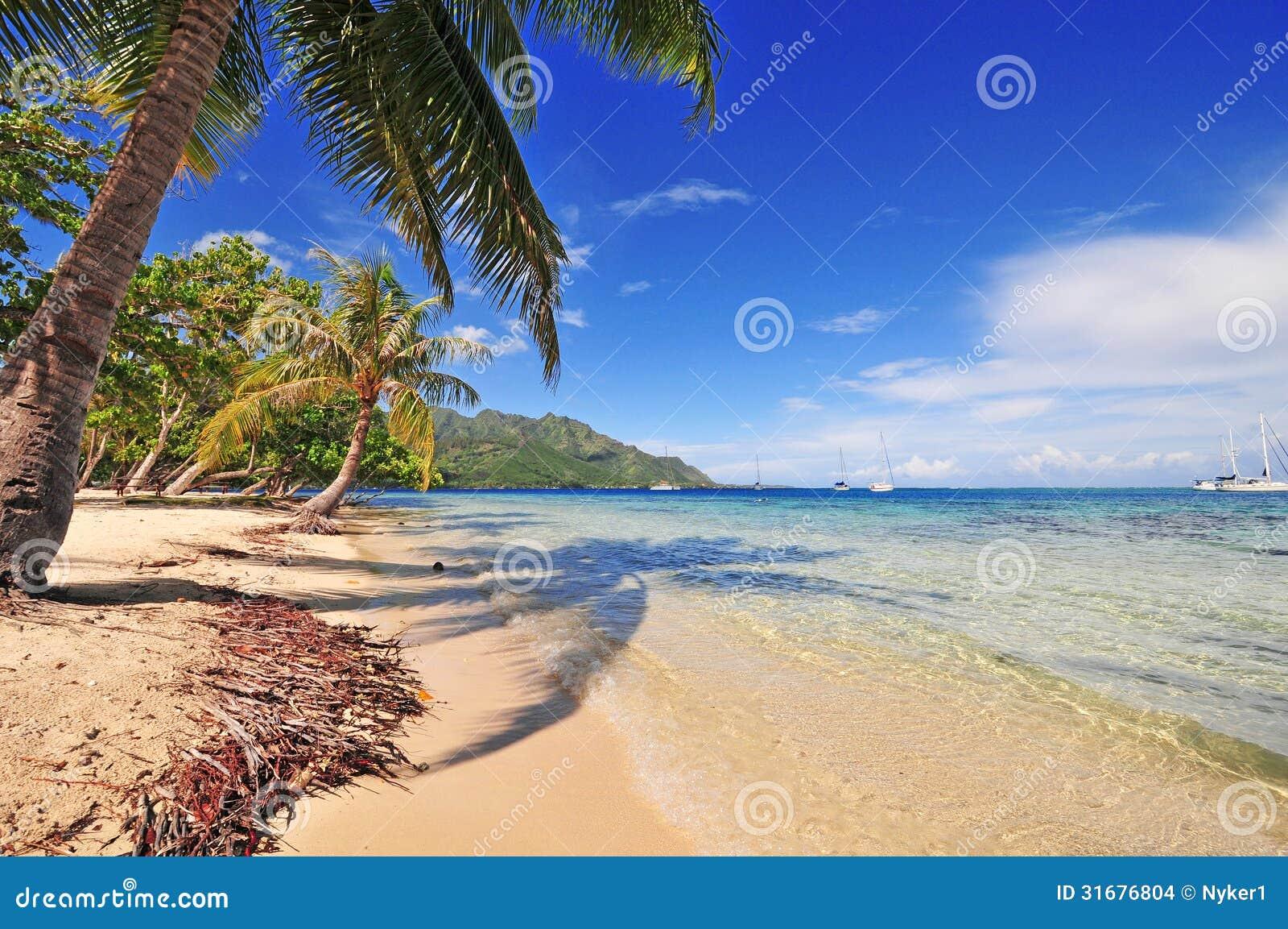 Praia de Moorea e palma, Tahiti, Polinésia francesa
