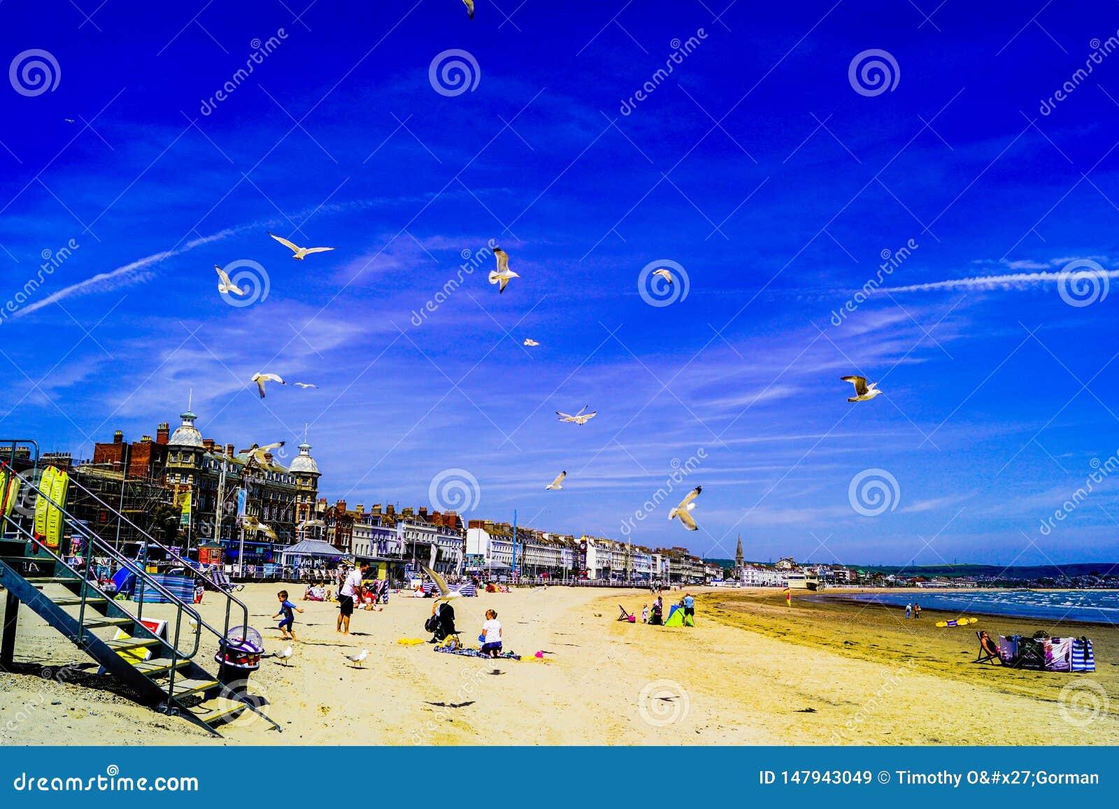Praia de Weymouth ocupada com povos e pássaros