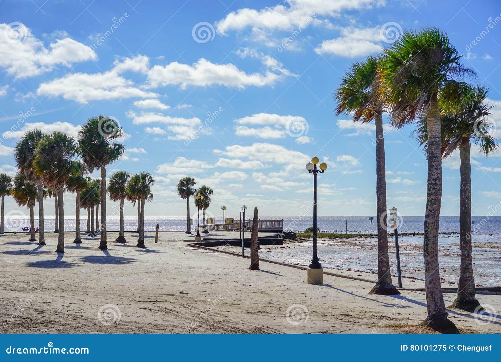 Praia do hernando de Florida: árvore