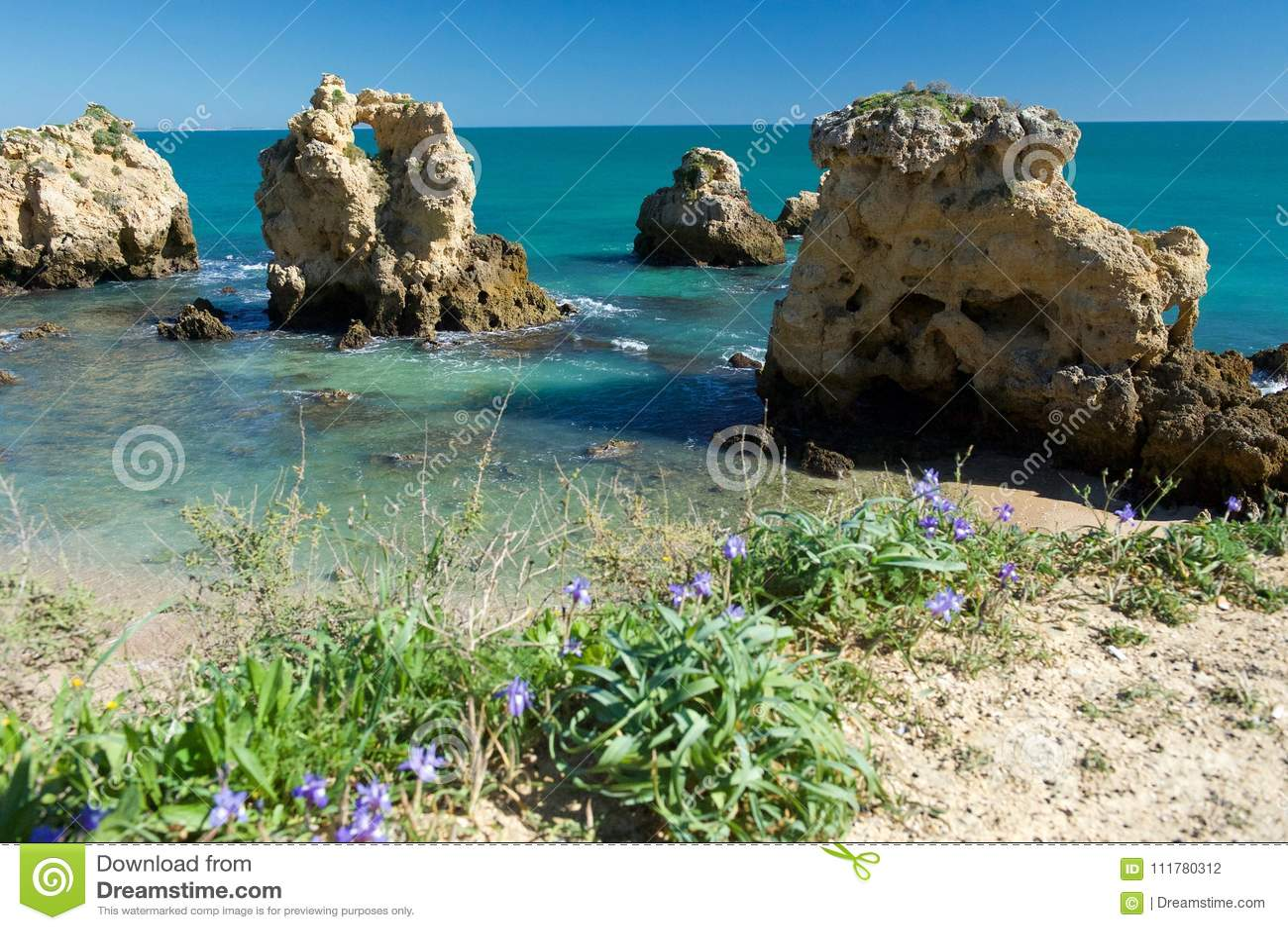 Praia dos Arrifes. Springtime blooming.