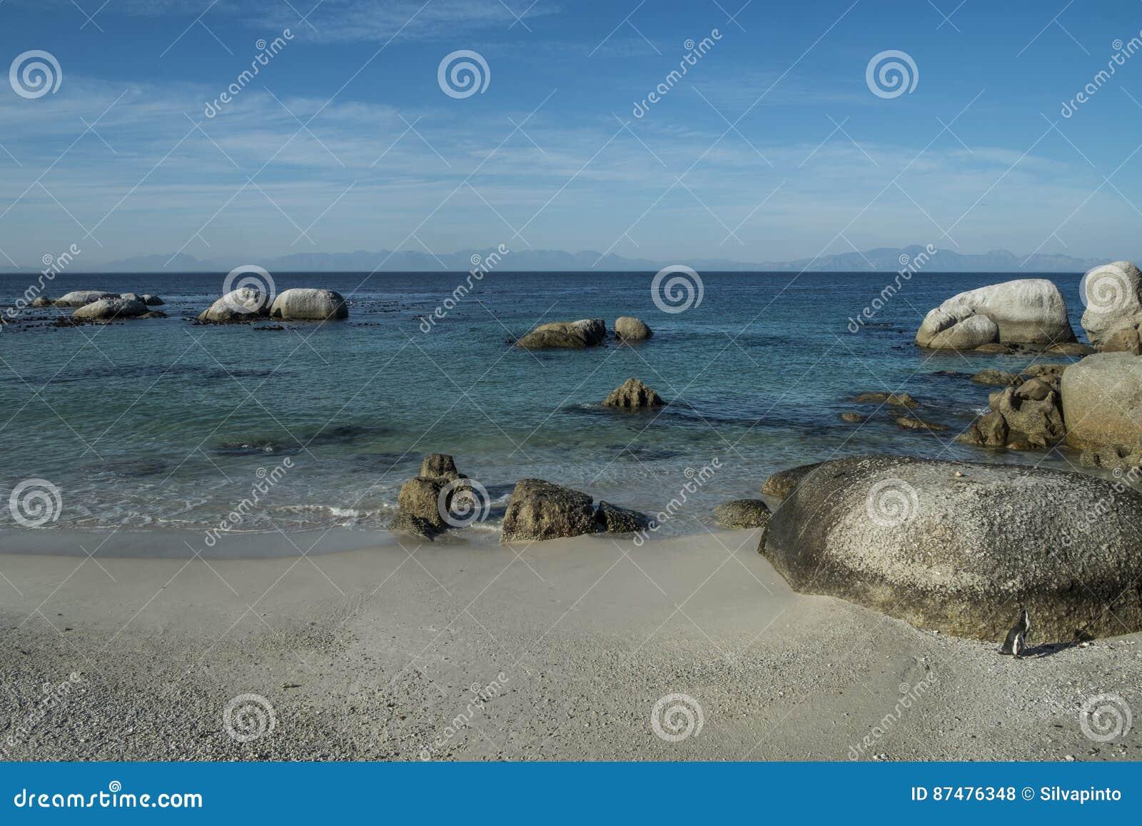 Praia dos pinguins na cidade do cabo