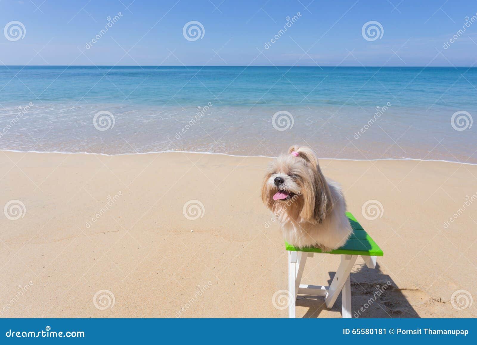 Praia e mar longos do cão do cabelo