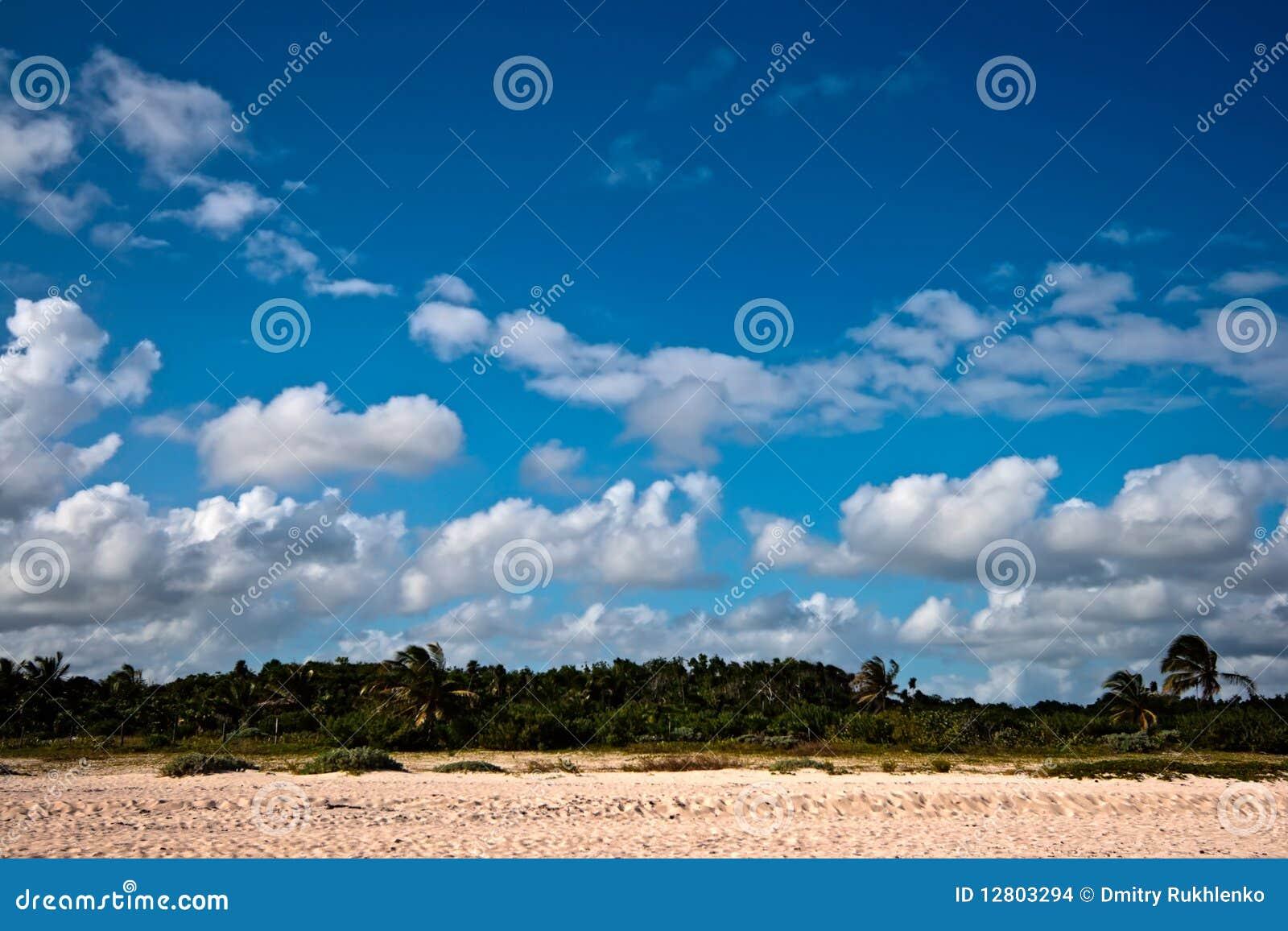 Praia e palmas bonitas
