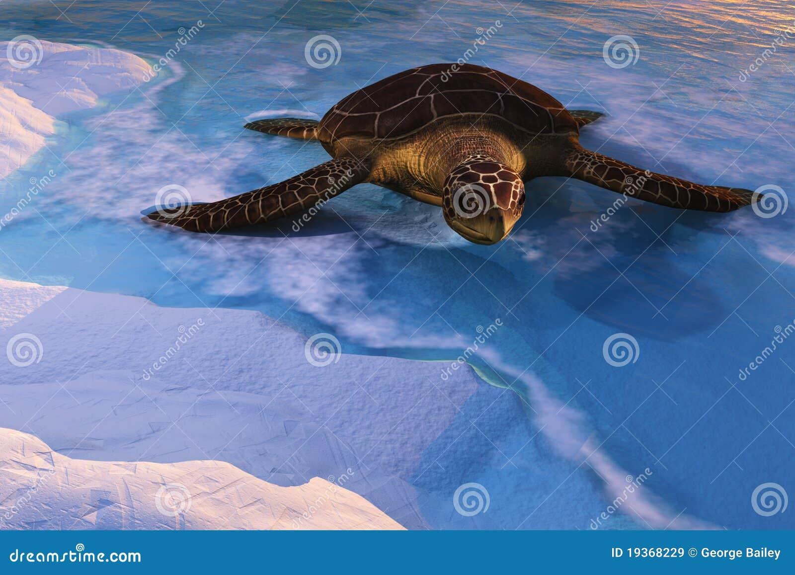 Praia entrando da tartaruga do mar
