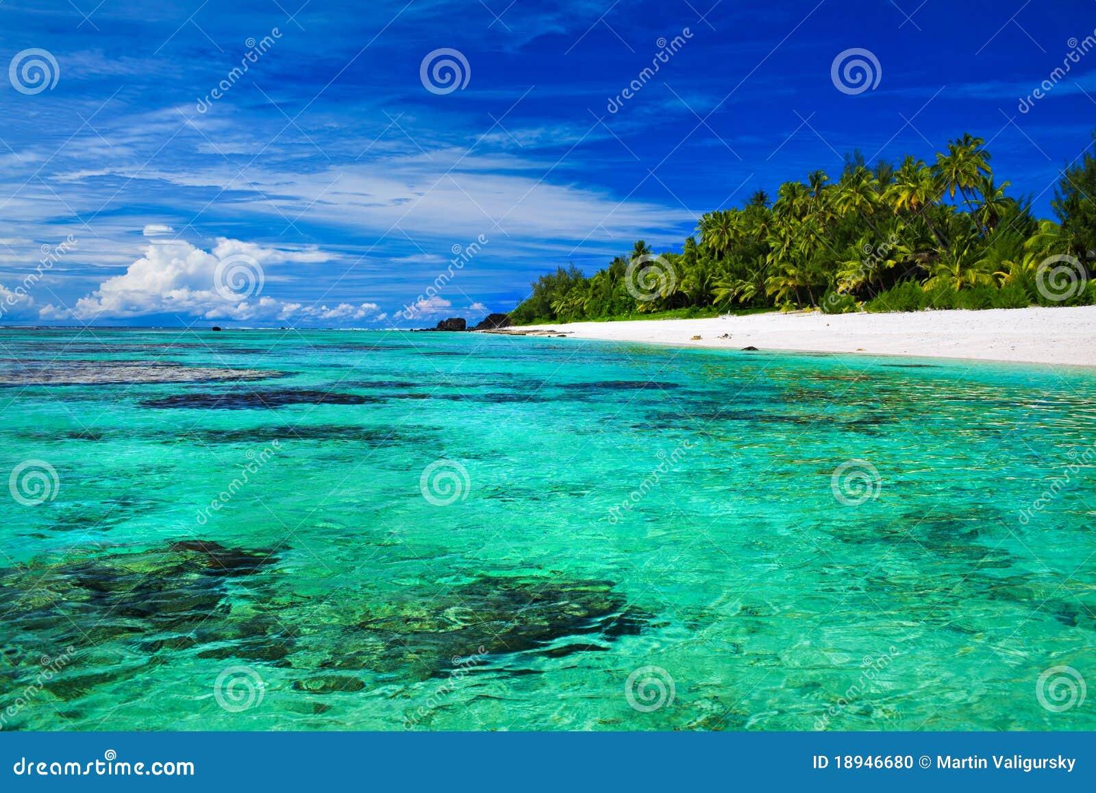 Praia snorkeling ideal com coral e palmeiras