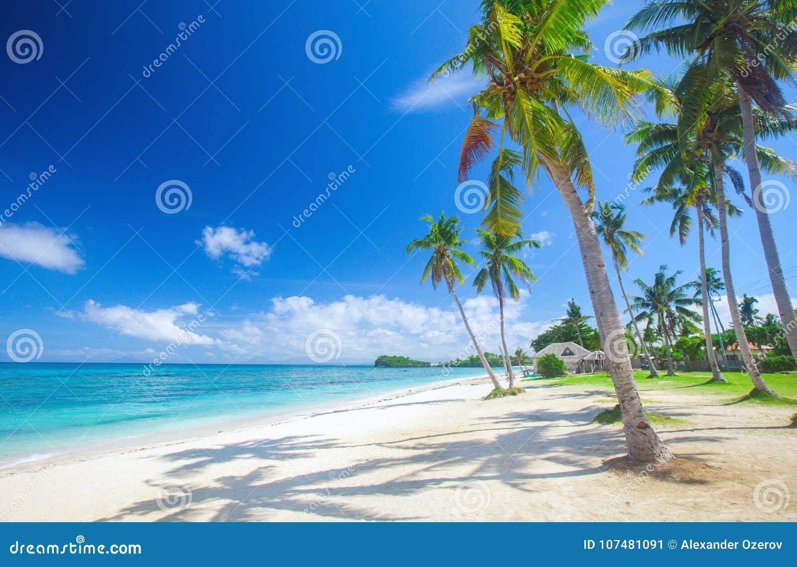 Praia tropical com palma de coco