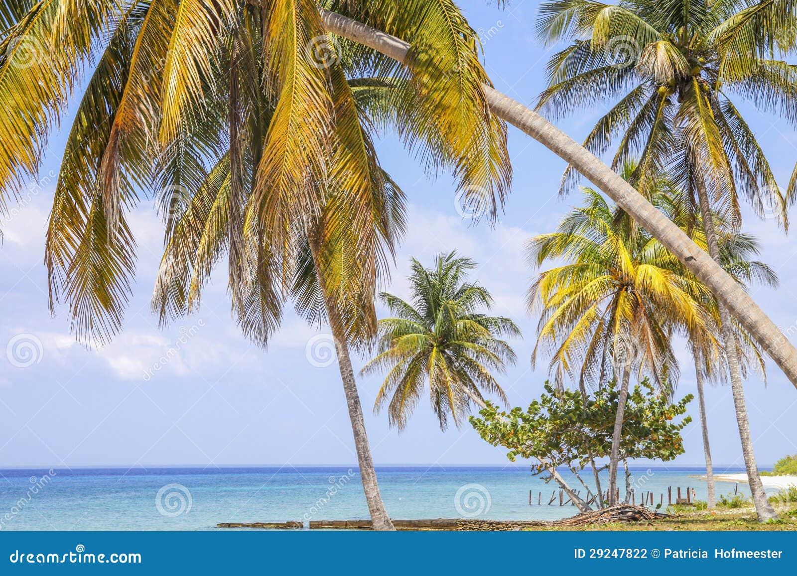 Download Praia Tropical Com Palmeiras Foto de Stock - Imagem de ponto, palma: 29247822