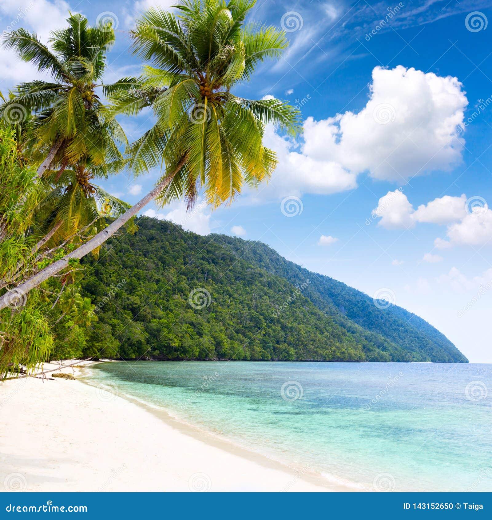 Praia tropical da ilha de Idillyc - mar morno, palmeiras, céu azul