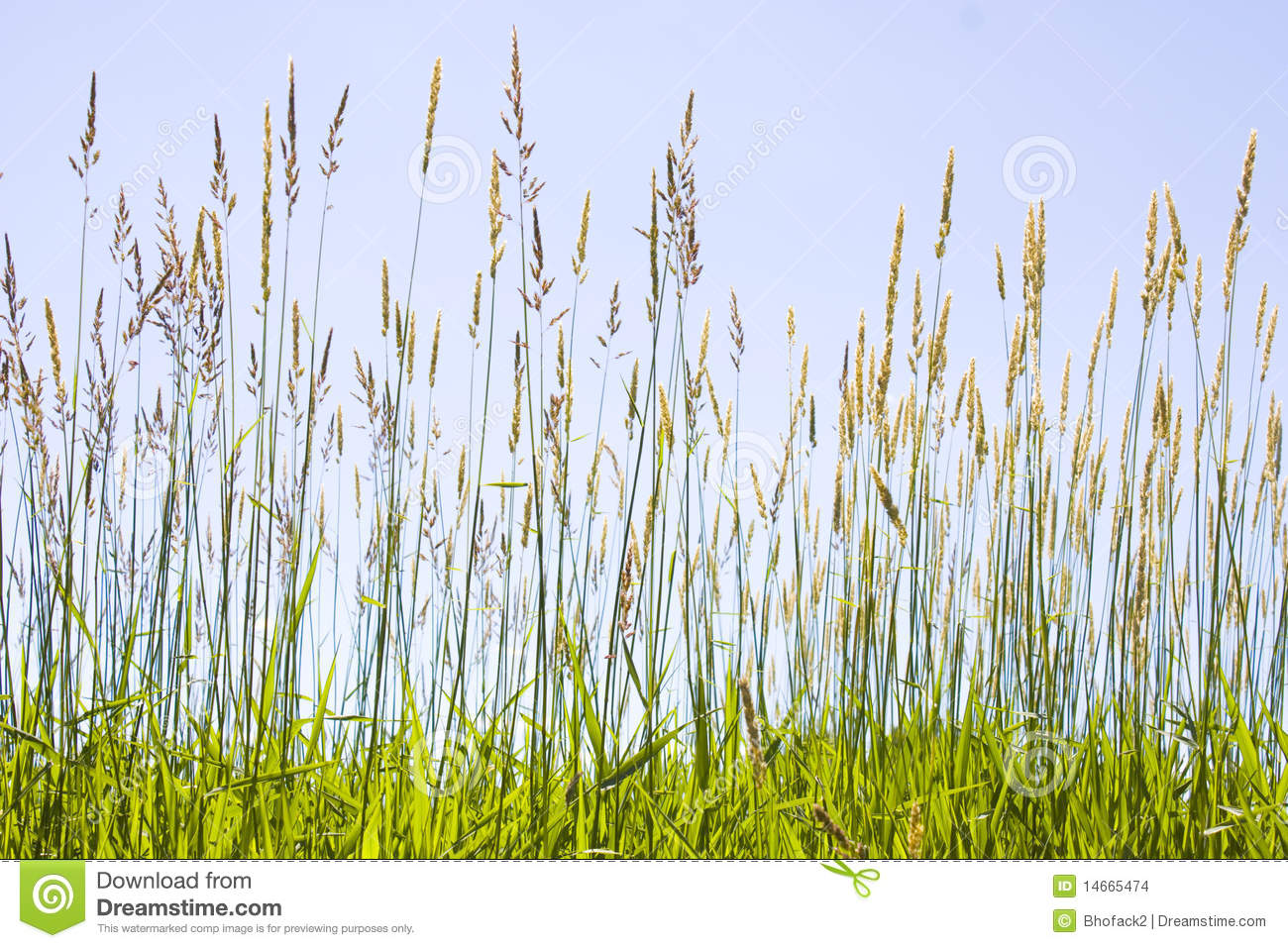 Prairie Grass Stock Images - Image: 14665474
