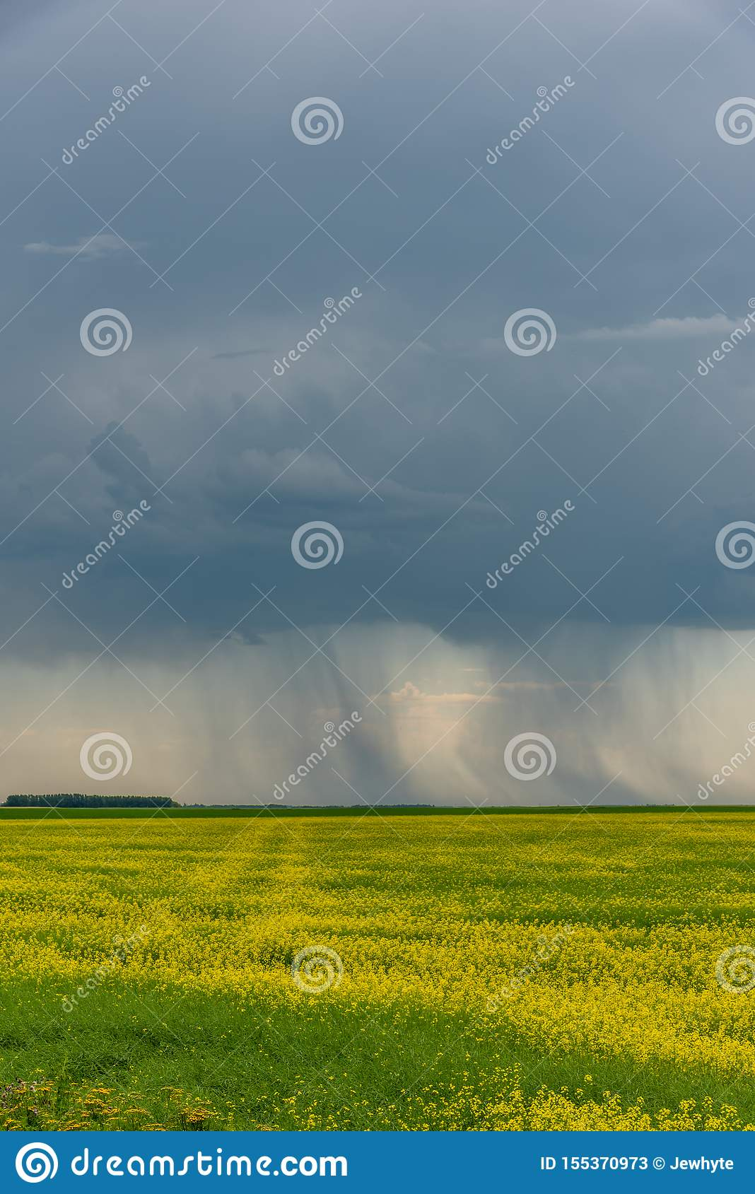 Prairie storms sweep over canola fields