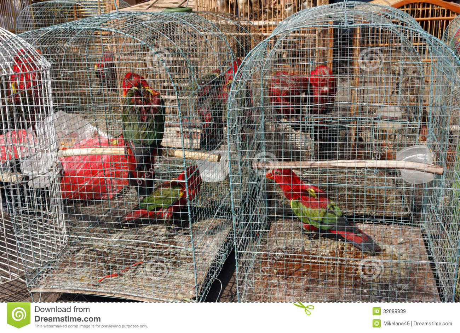 Pramuka ptaka rynek, Dżakarta, Indonezja