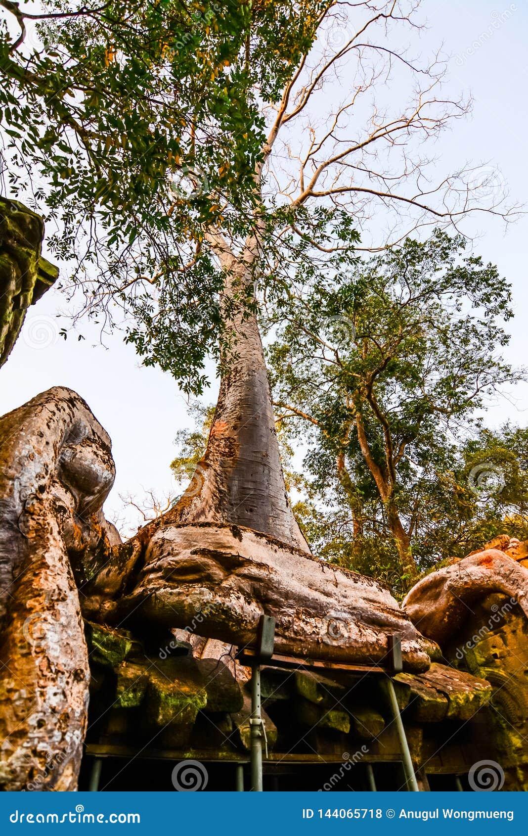Prasat Ta Phrohm is een steenkasteel tijdens de oude Khmer periode wordt gebouwd die