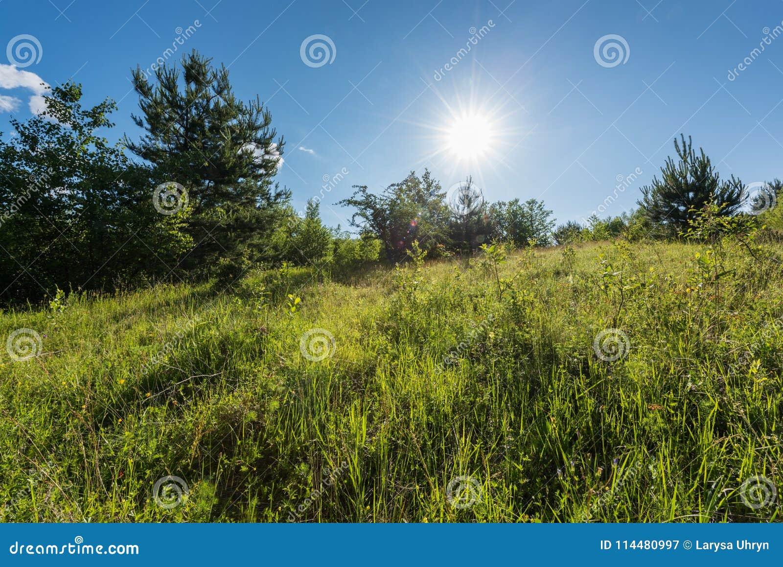 Prato Alpino Verde Con Cielo Blu Ed Il Sole Paesaggio Di Estate
