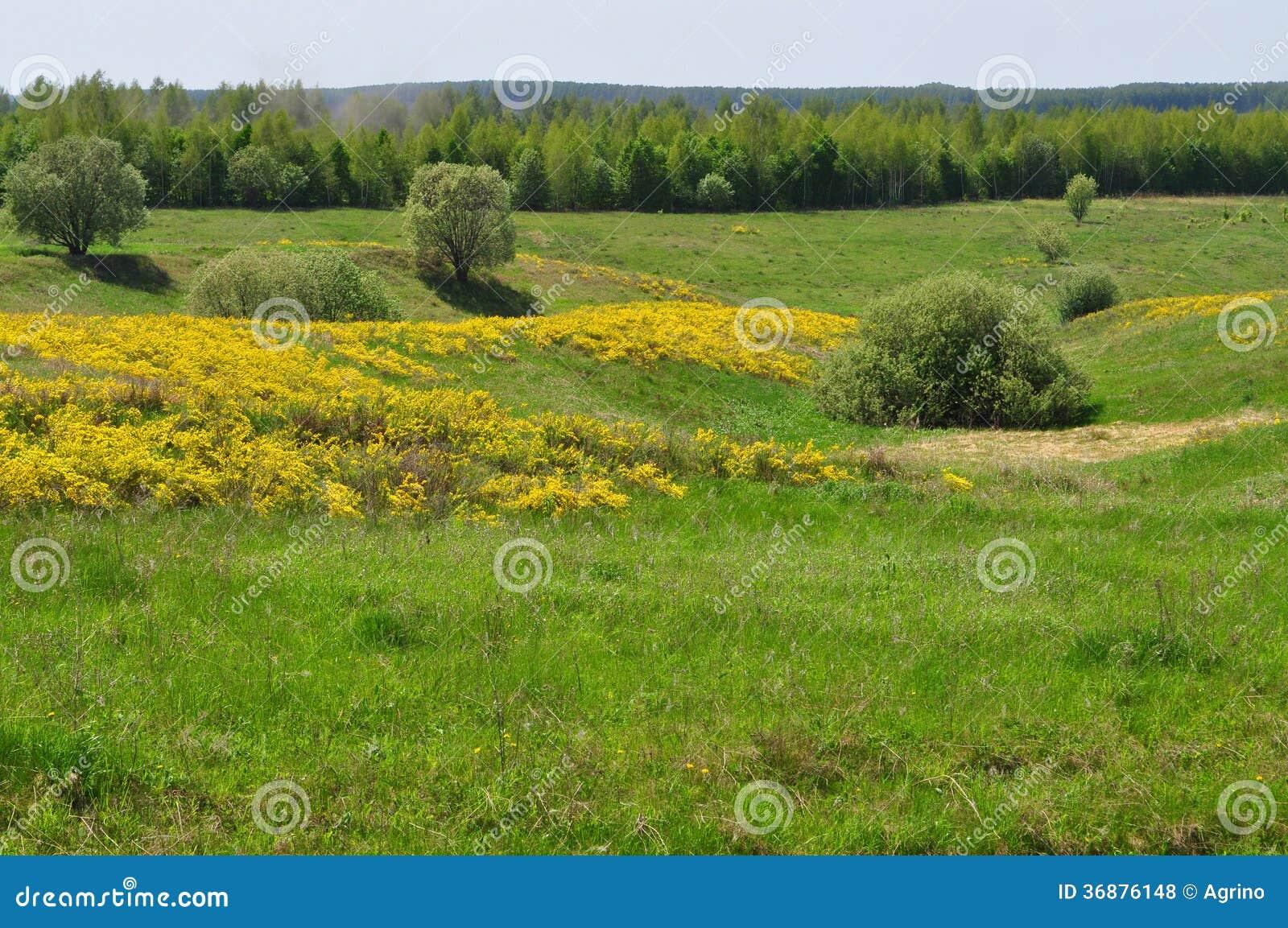 Download Prato con i fiori gialli fotografia stock. Immagine di albero - 36876148