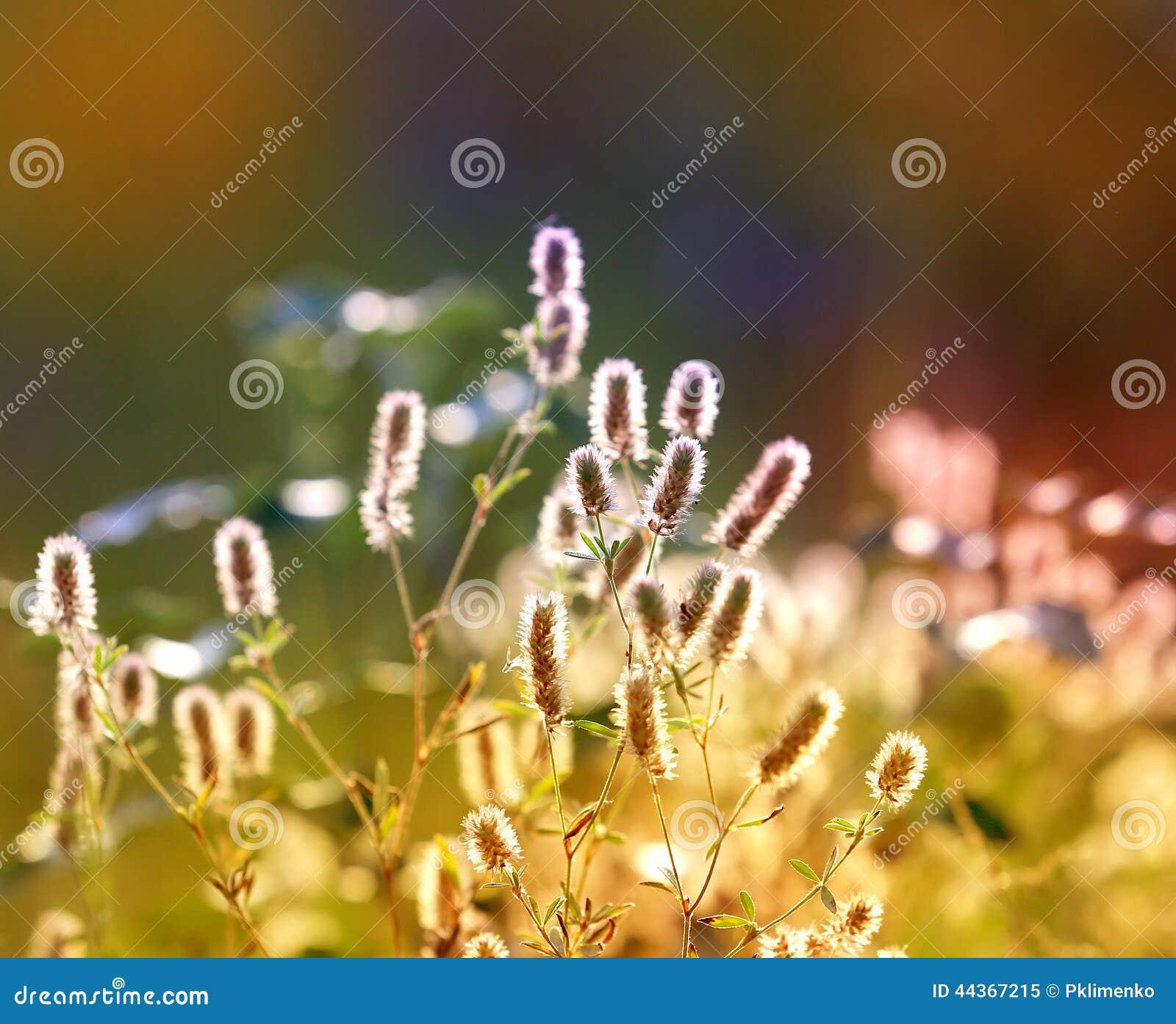 Prato del fiore di estate
