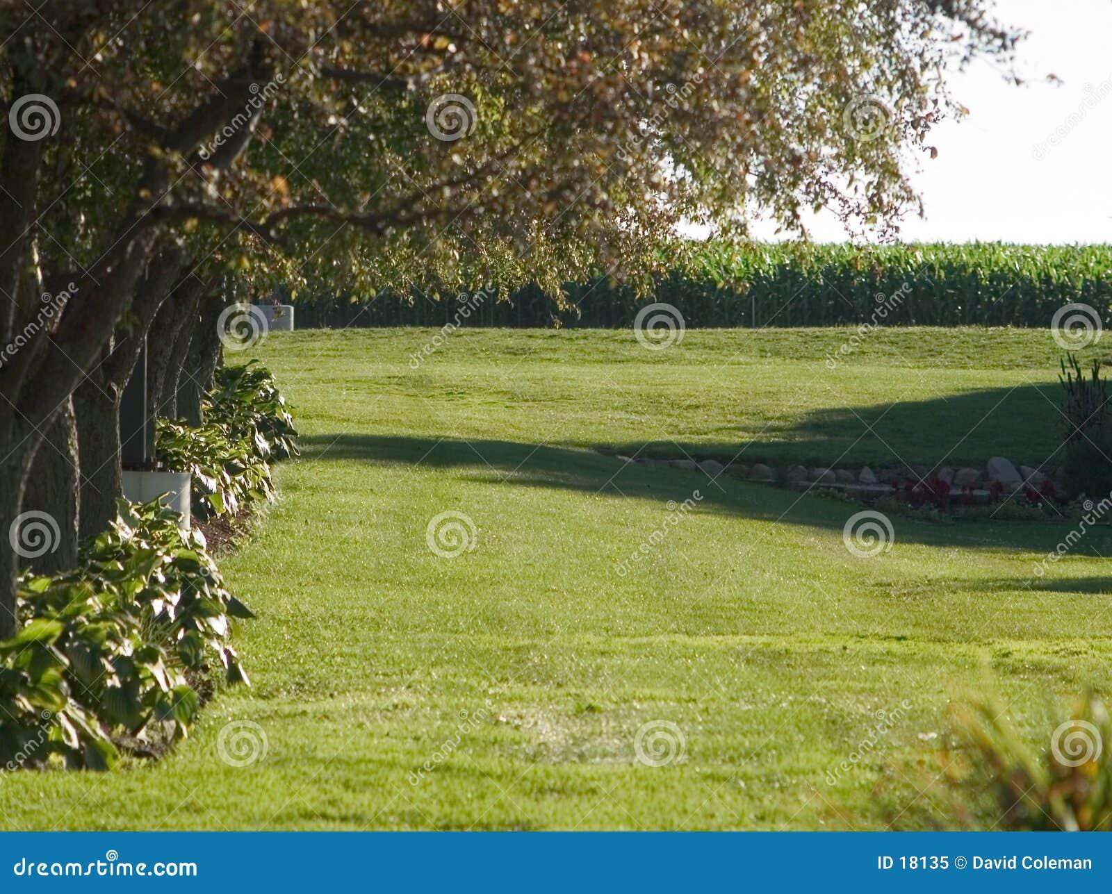 Download Prato Inglese Allineato Albero Immagine Stock - Immagine di fiori, cereale: 18135