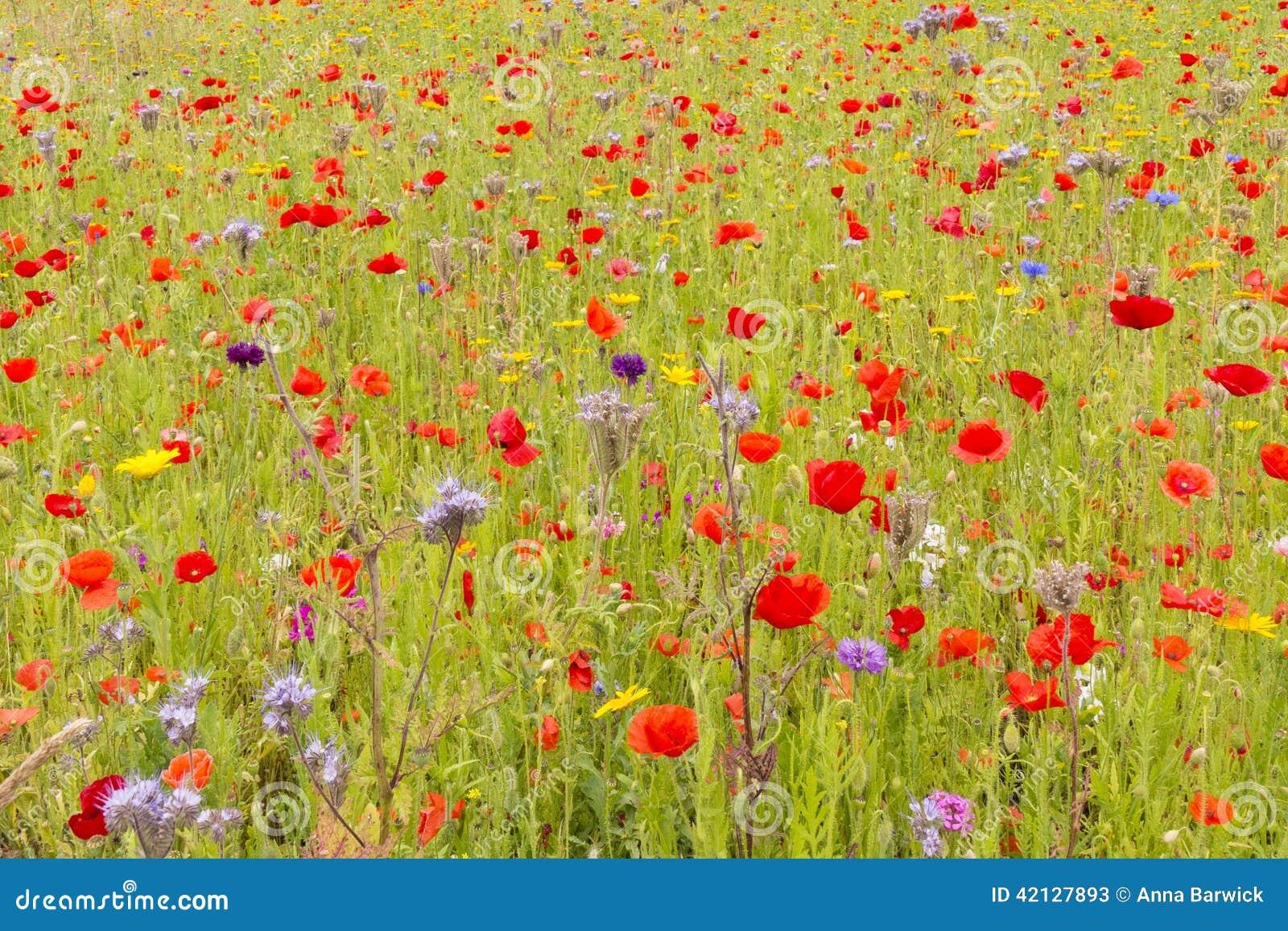 Prato inglese del Wildflower