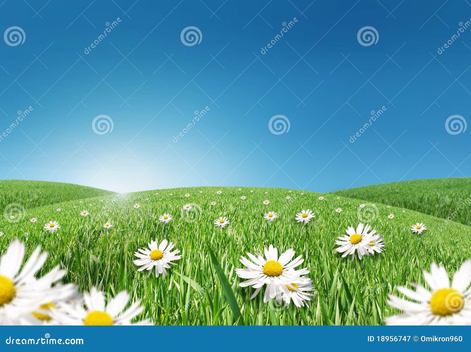 Prato verde immagine stock immagine di ciano stagioni for Prato verde