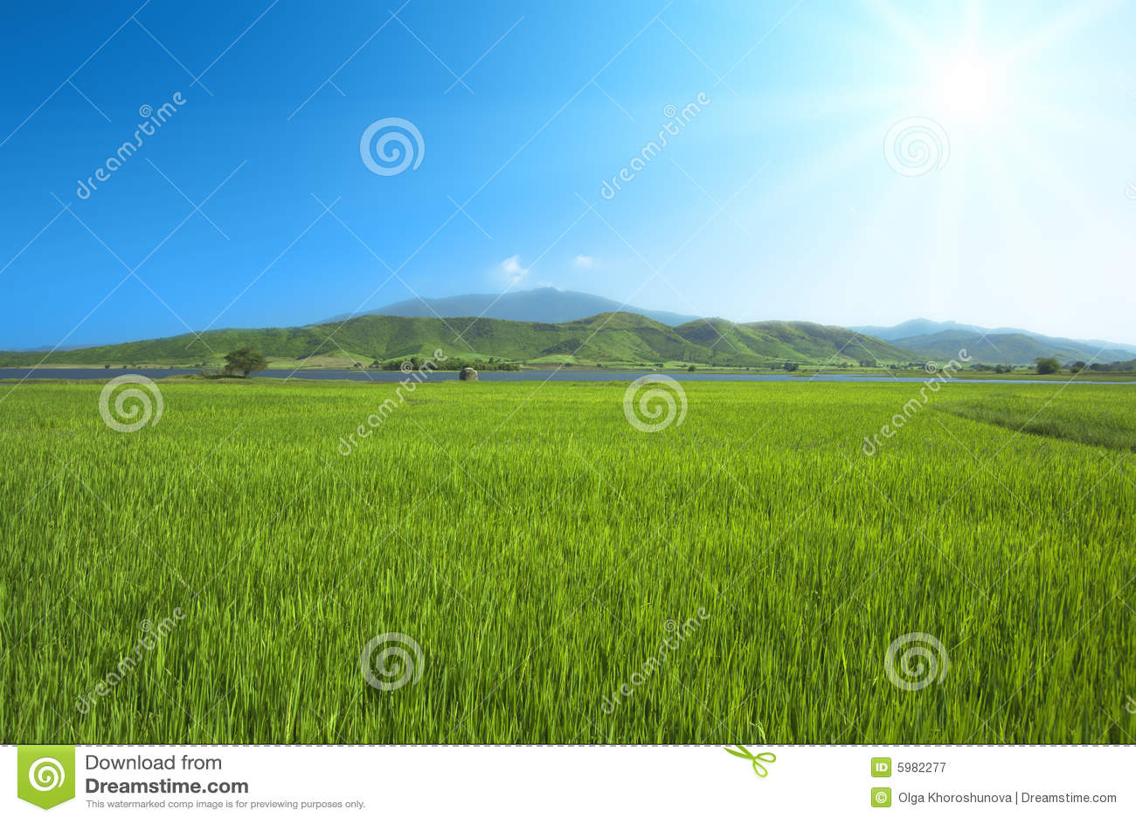 Prato verde immagine stock immagine di campo verde for Prato verde