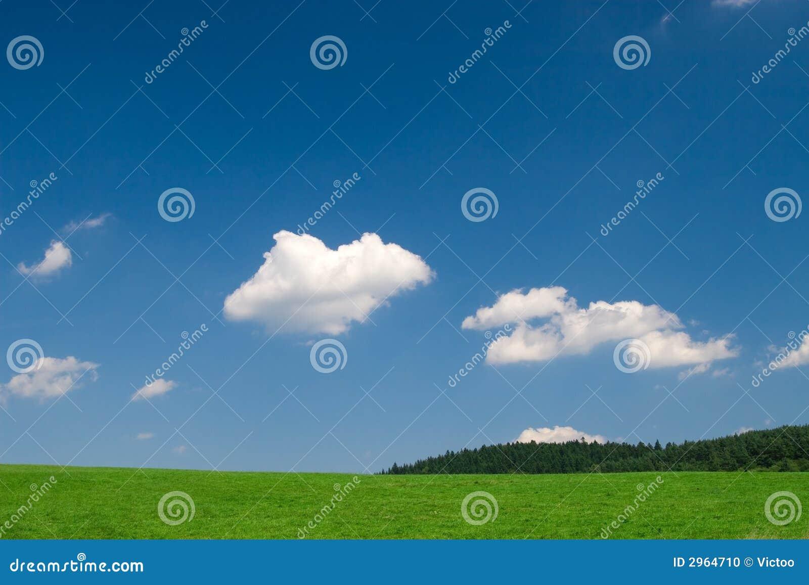 Prato verde con cielo blu fotografia stock immagine 2964710 for Prato verde