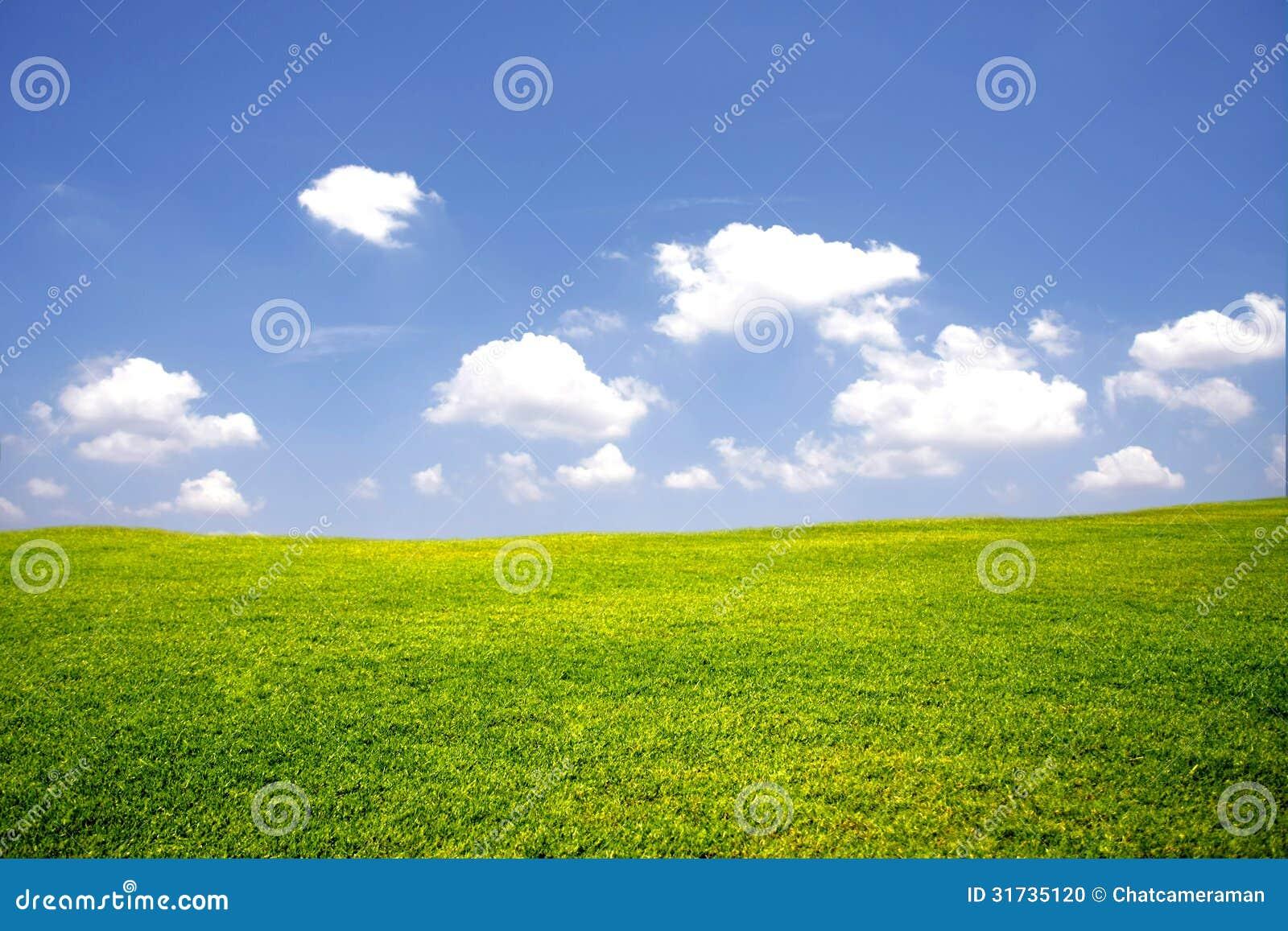 Prato verde con cielo blu fotografia stock immagine for Prato verde