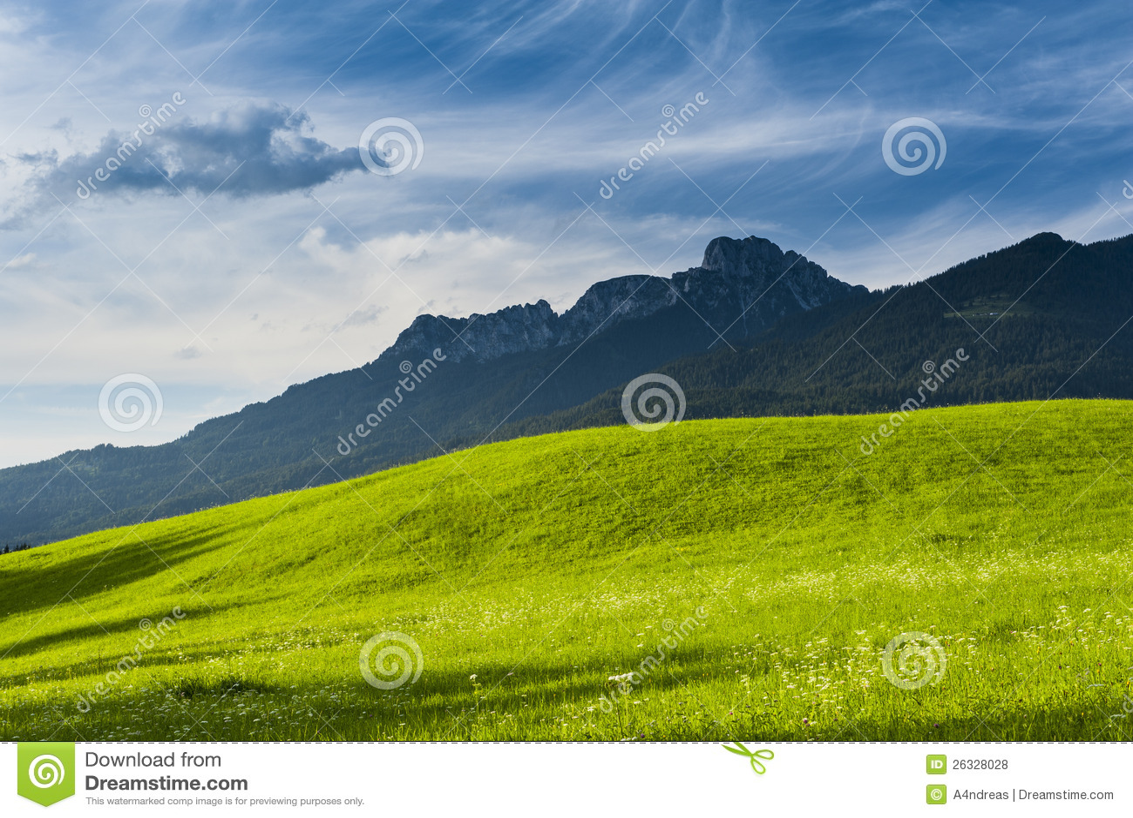 Prato verde fertile pieno di sole fotografia stock for Prato verde