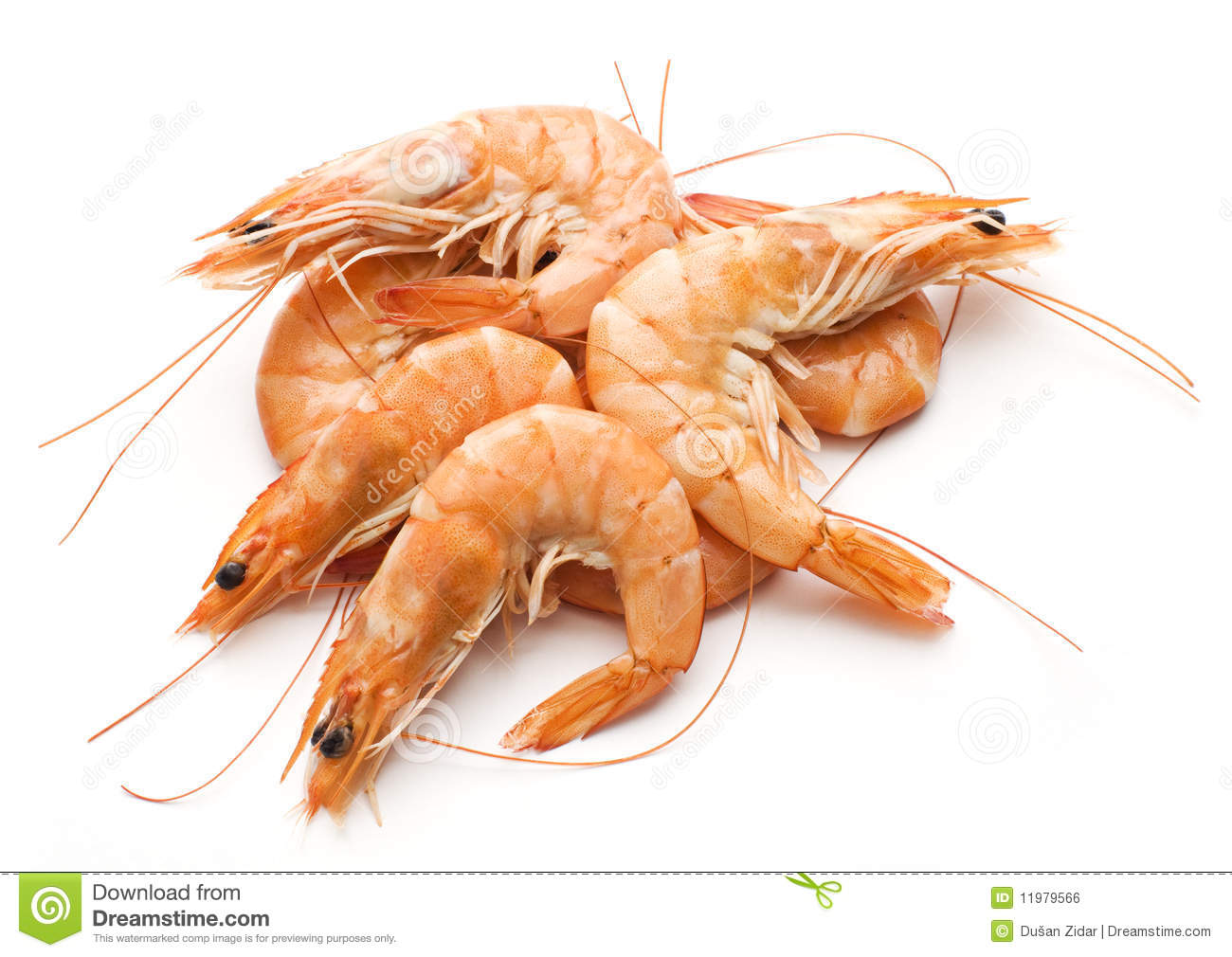 Prawn Royalty Free Stock Image Image 11979566