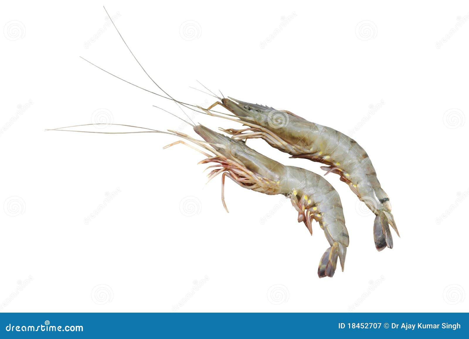 Prawn Fish Isolated On White Royalty Free Stock