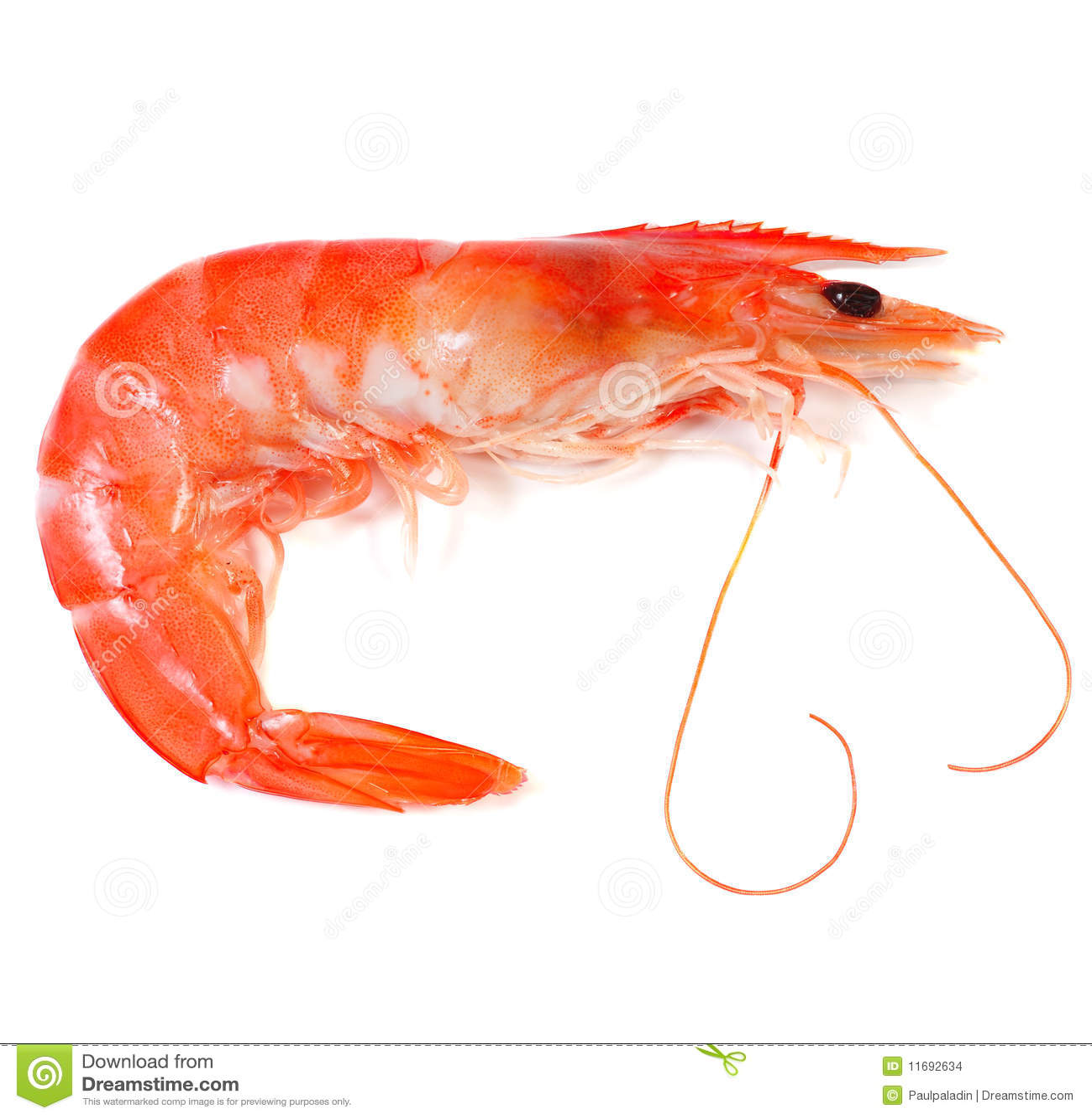 Prawn Shrimp Stock Images - Image: 11692634