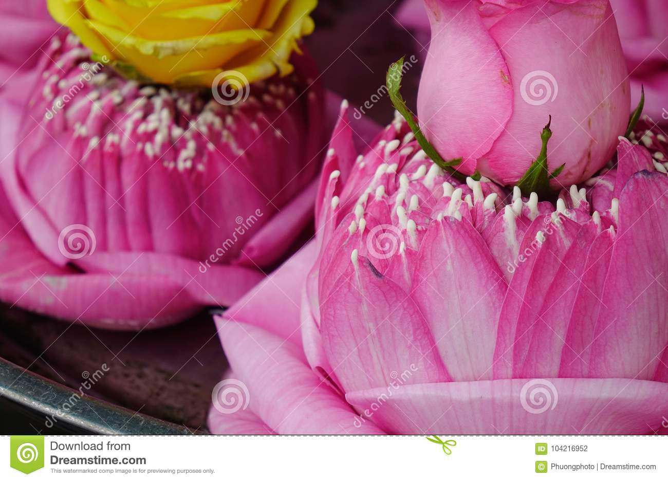 Praying flowers for sale at the temple stock photo image of praying lotus flowers for sale at a hindu temple in bangkok thailand izmirmasajfo