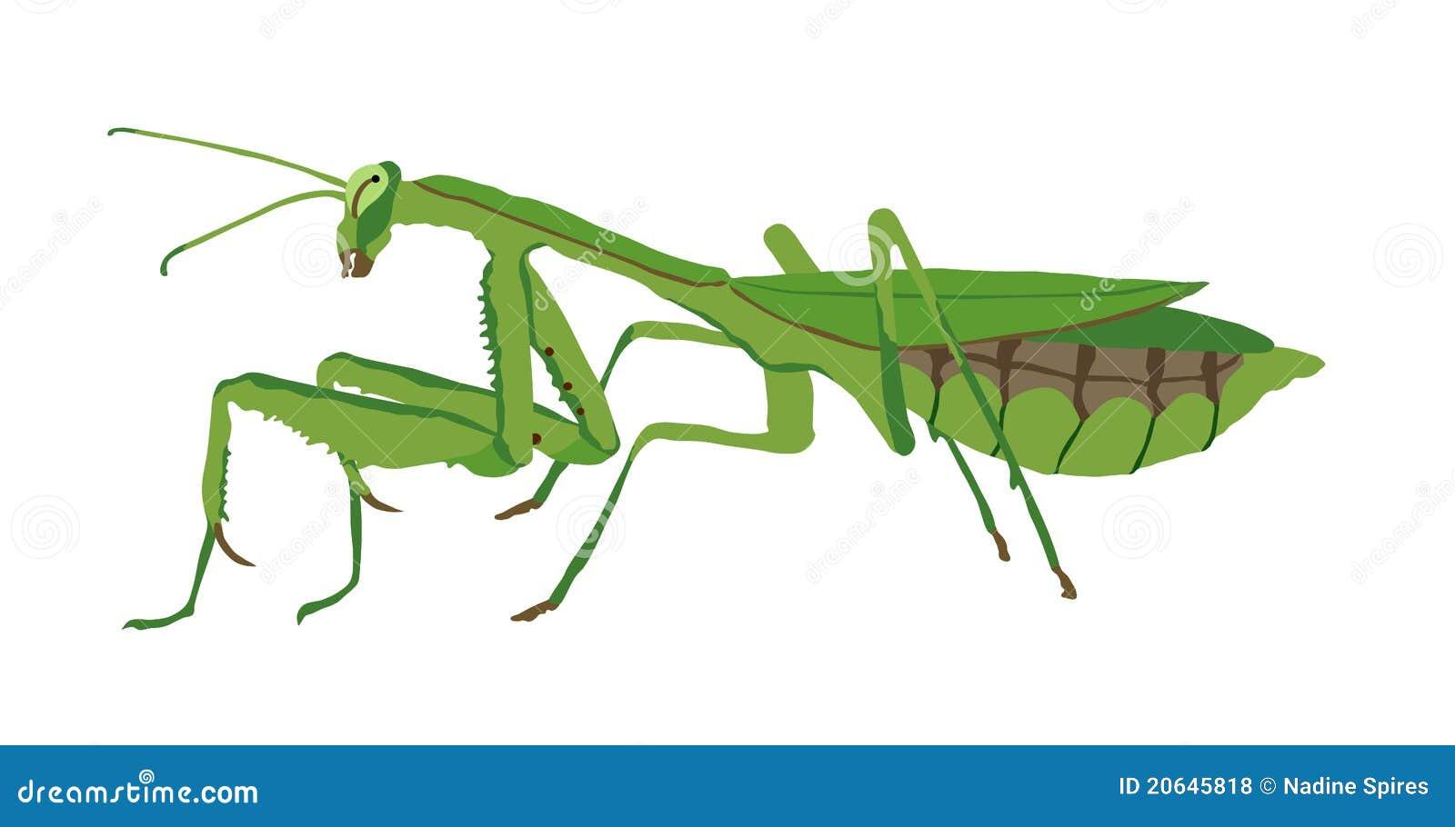 praying mantis stock illustrations 255 praying mantis stock rh dreamstime com praying mantis clip art free Praying Mantis Signs
