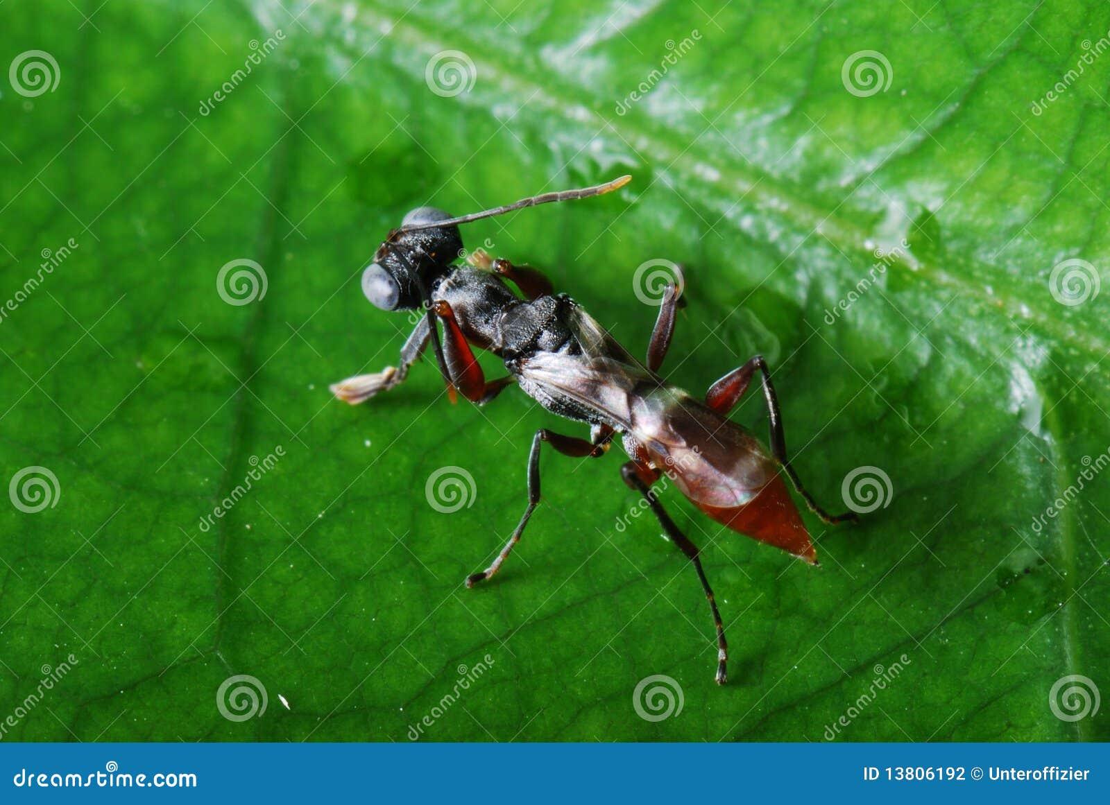 Praying Mantis Nymph stock photo. Image of ecology, green - 13806192