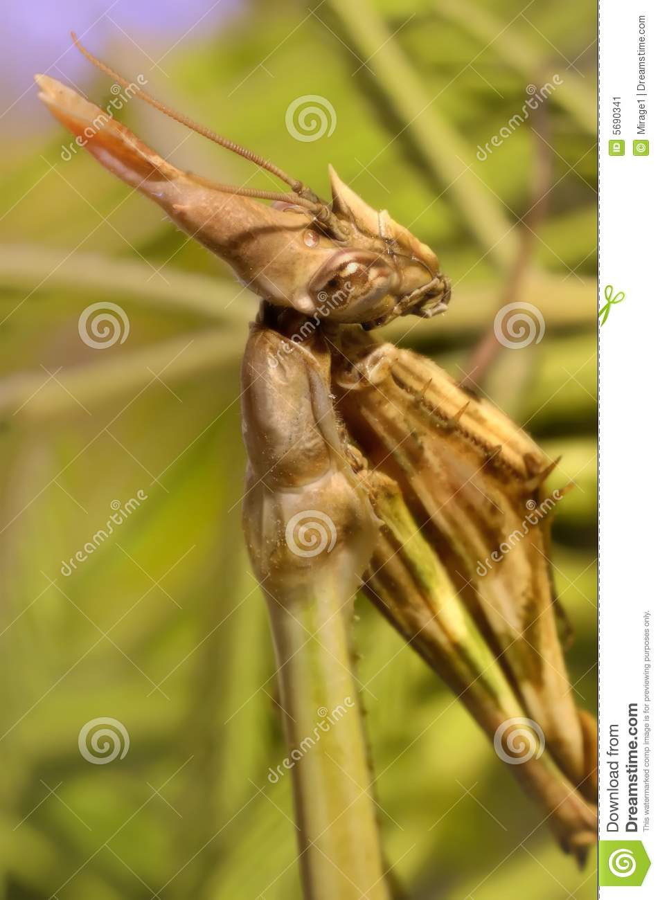Praying Mantis Praying