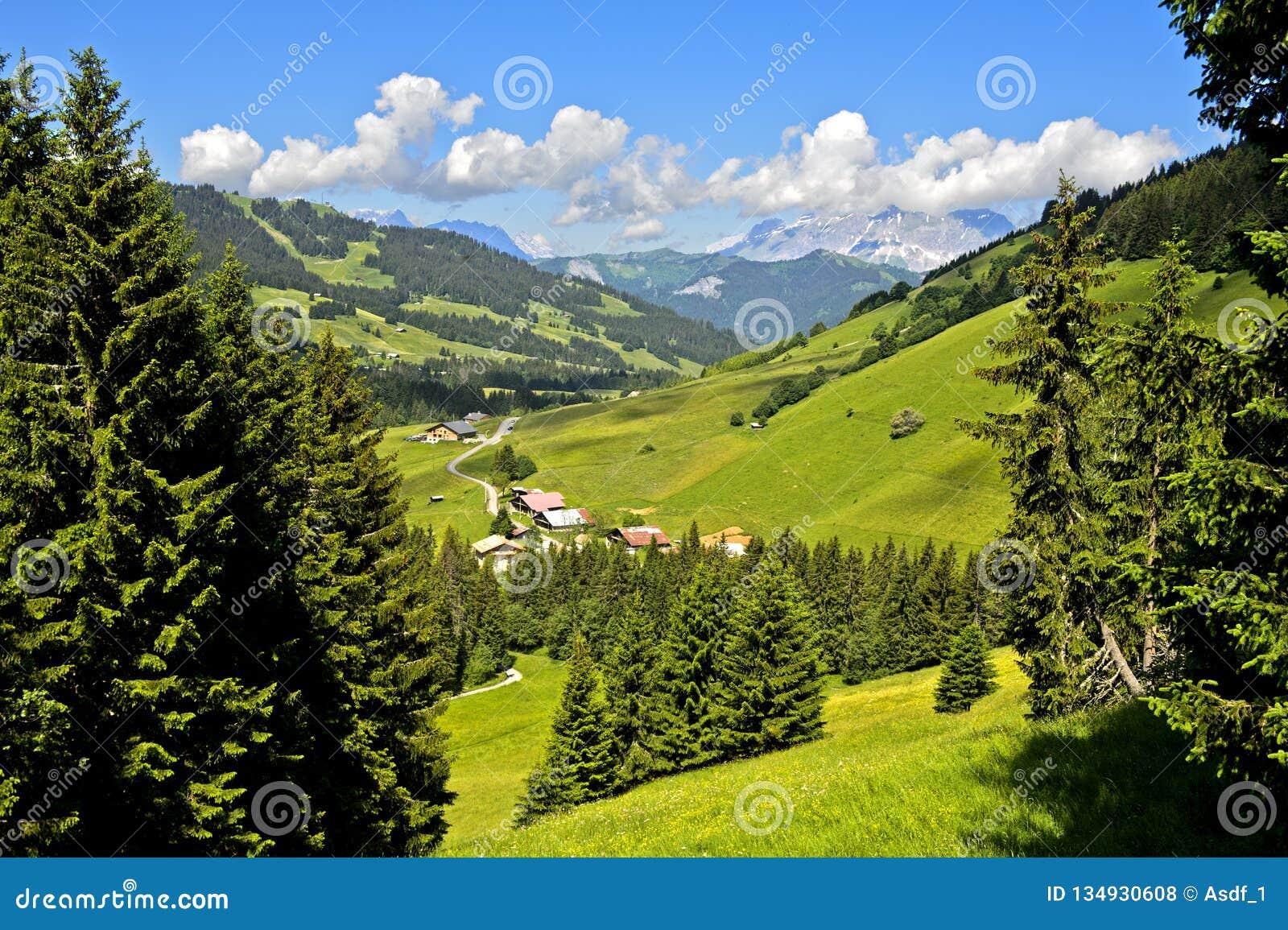 Pre-alpien landschap met weilanden en bossen in de zomer