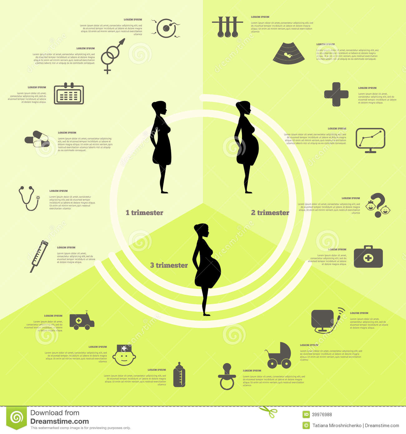 pregnancy and birth infographics  pregnancy stages stock