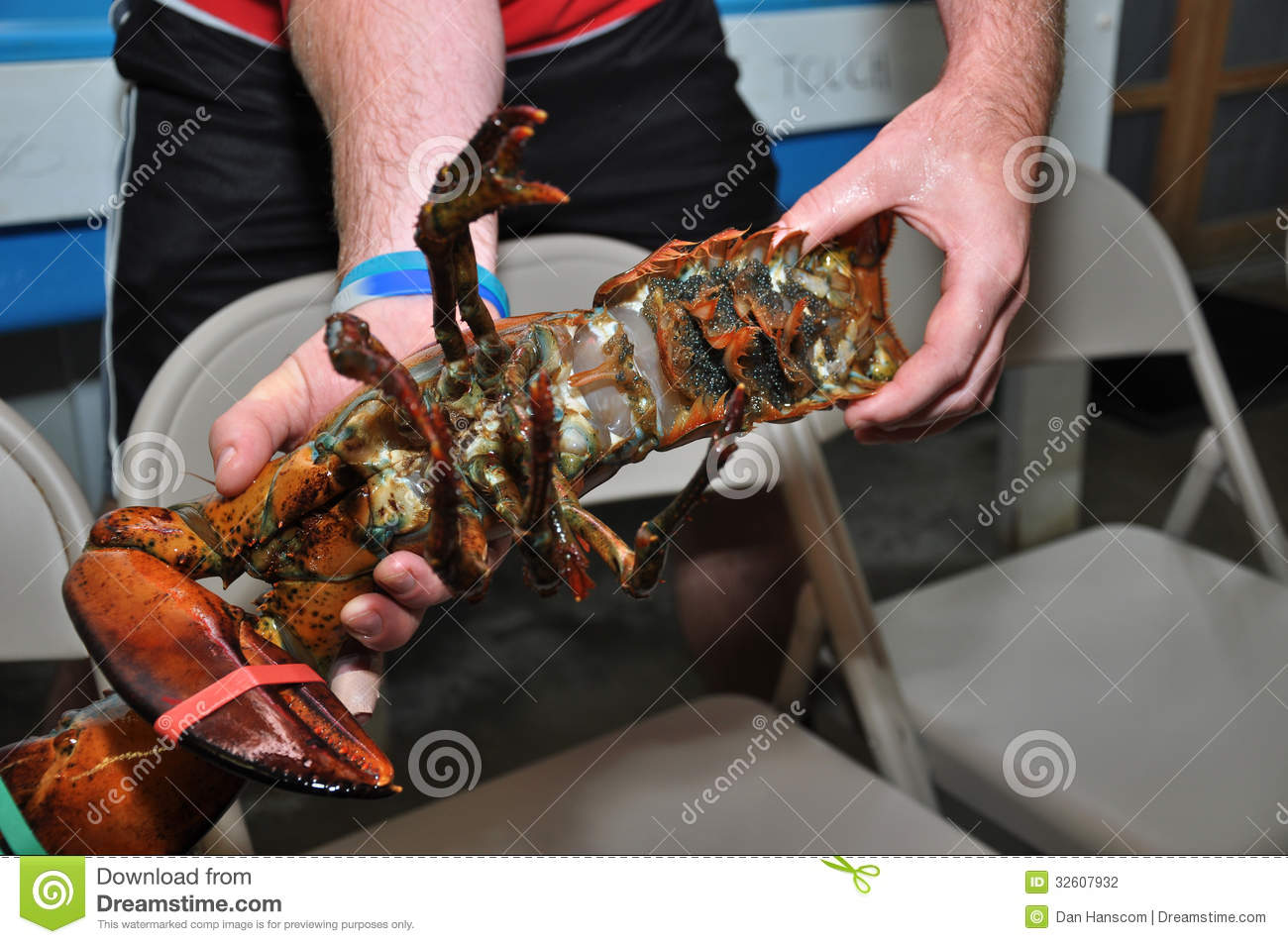 Pregnant Female Lobster stock photo. Image of spawn, parts - 32607932
