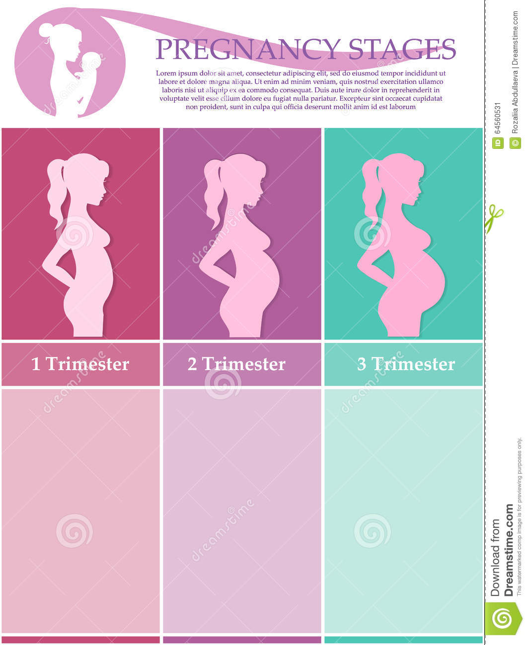 pregnant woman - first, second and third trimester stock vector, Human Body