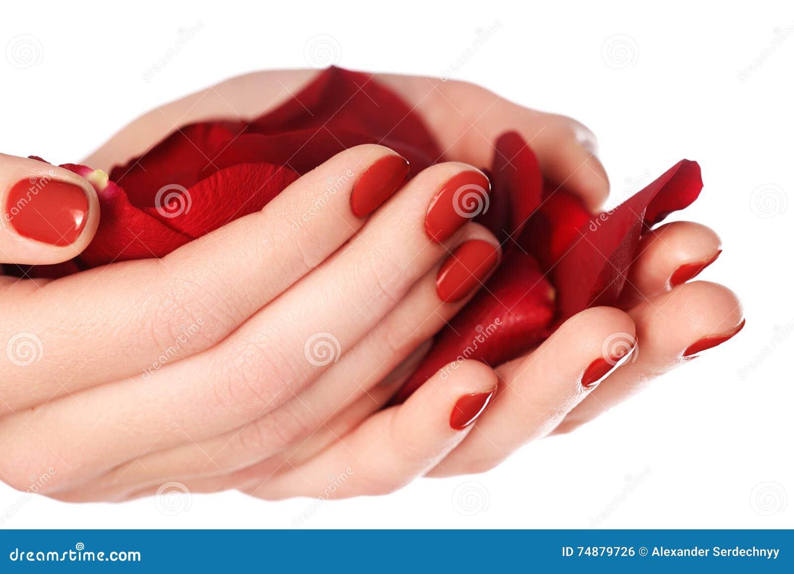 Pregos fêmeas bonitos do dedo com o close up vermelho do prego nas pétalas P