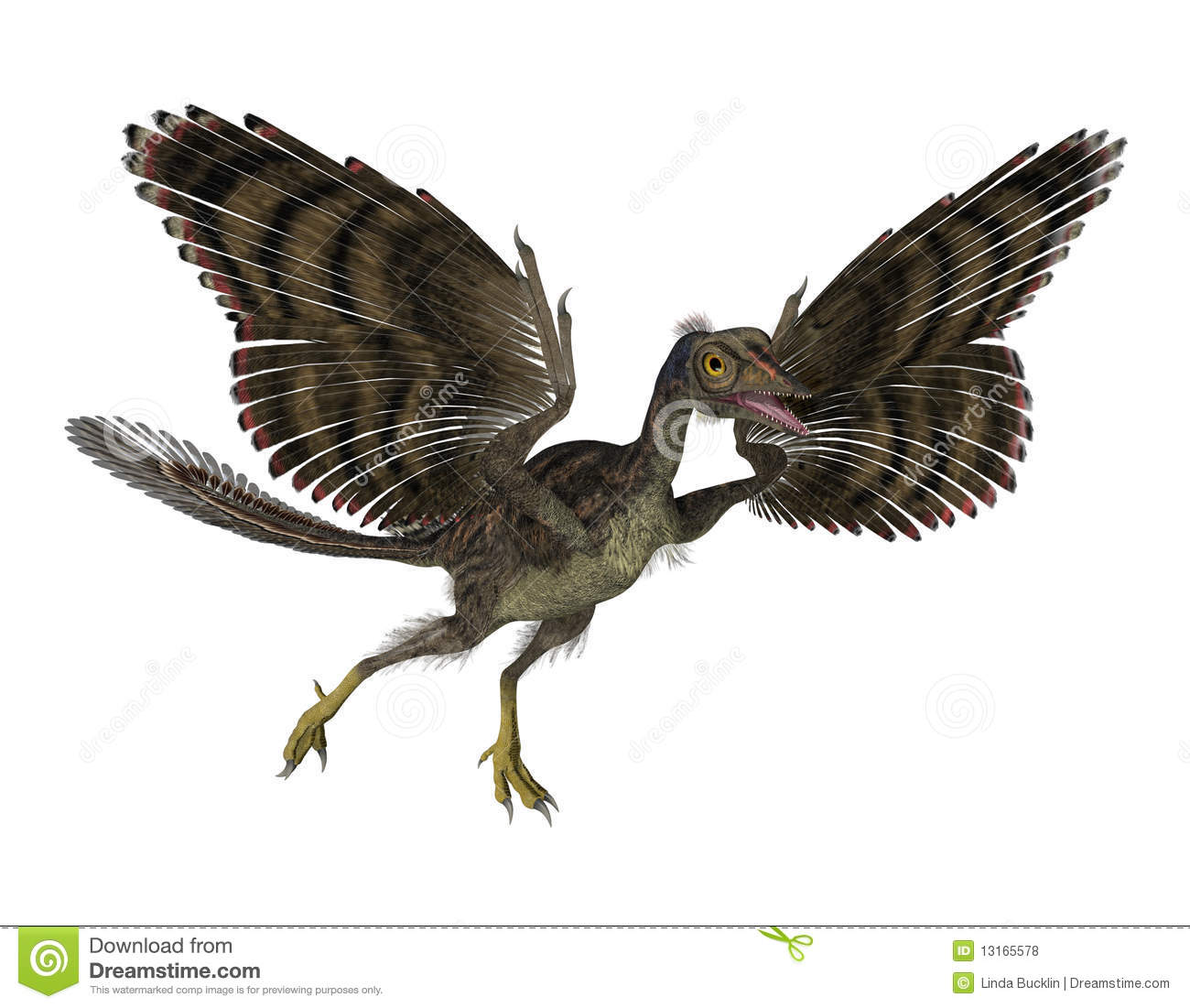 an analysis of archaeopteryx fossils during the jurassic period One of the earliest birds, archaeopteryx lived about 150 million years ago during the jurassic period, spanning the evolutionary gap between modern birds and feathered dinosaurs.