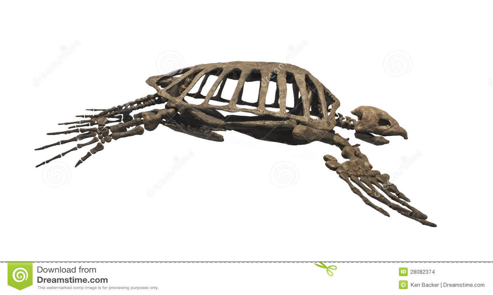 giant leatherback turtles