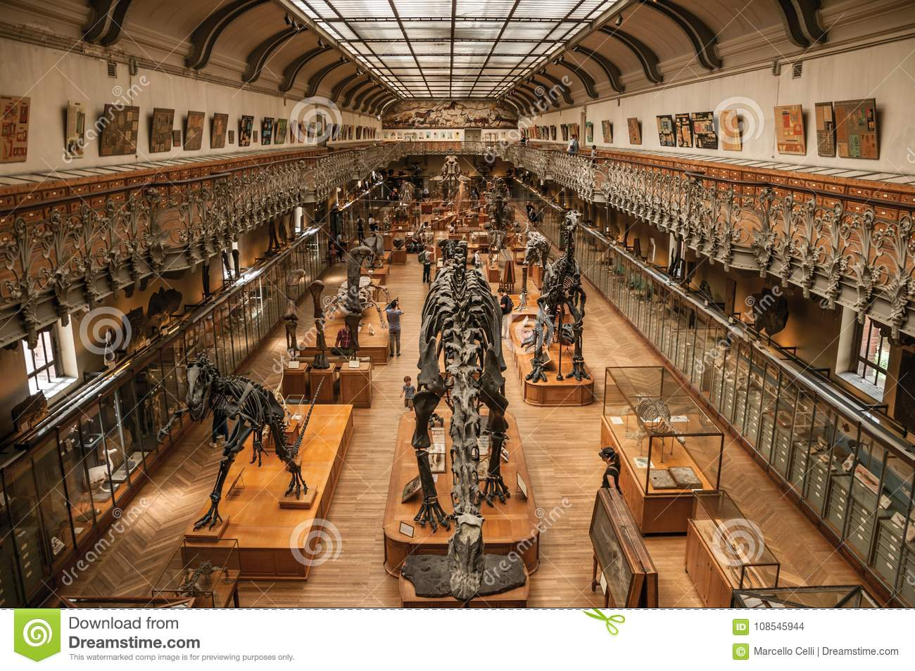 Prehistoric Skeletons And Fossils At Gallery Of Paleontology And ...