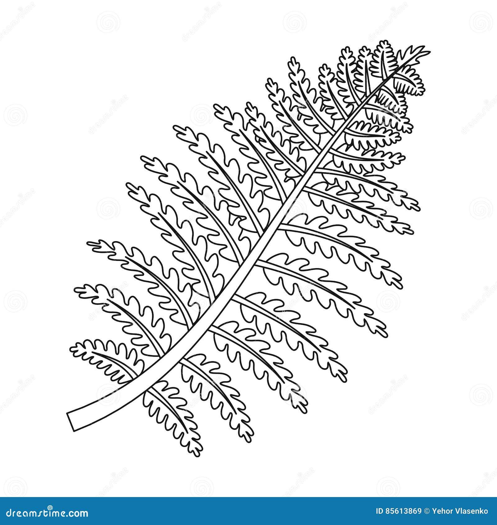 Prehistoryczna rośliny ikona w konturu stylu odizolowywającym na białym tle Dinosaury i prehistoryczny symbol