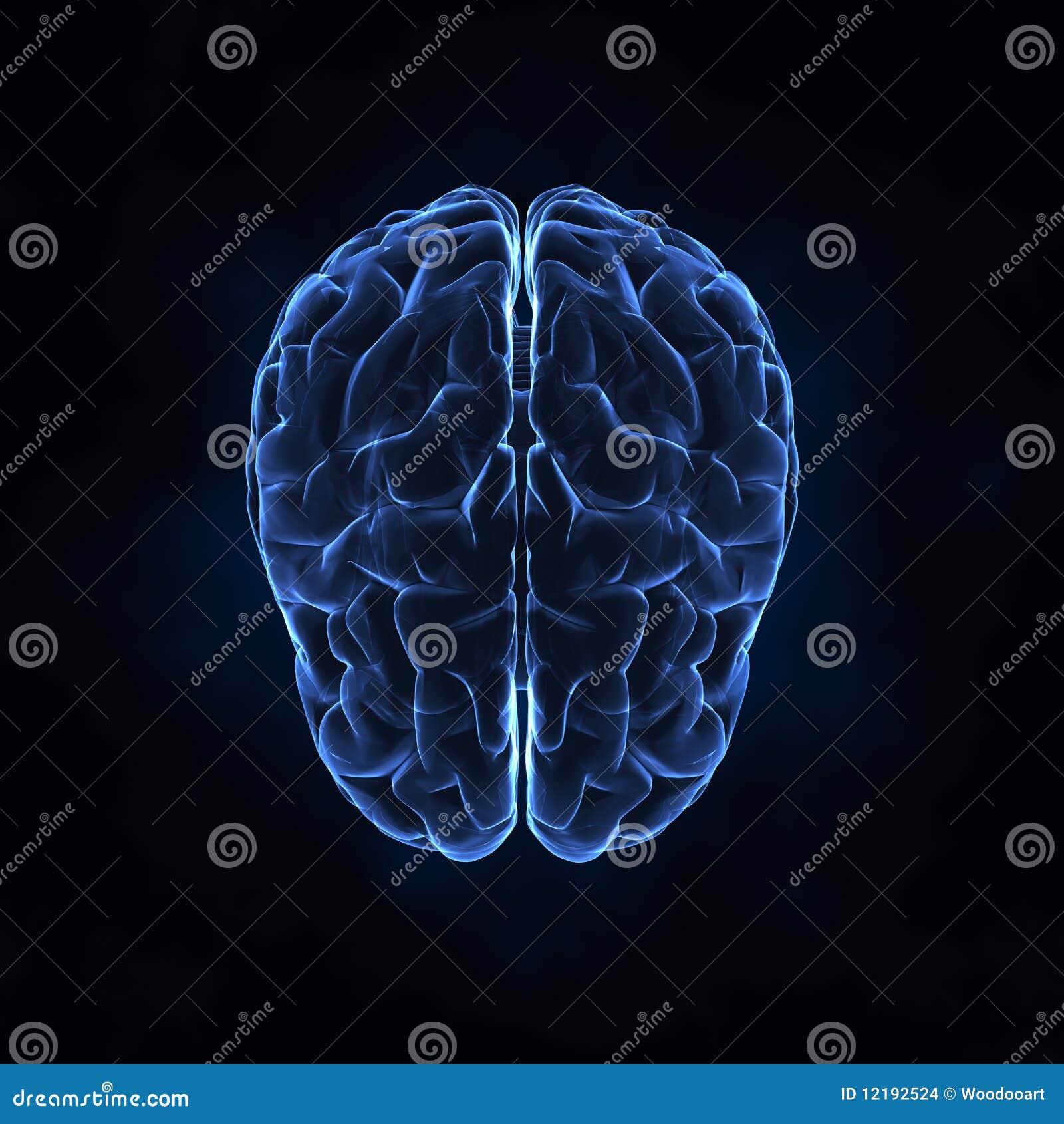Première vue de cerveau humain