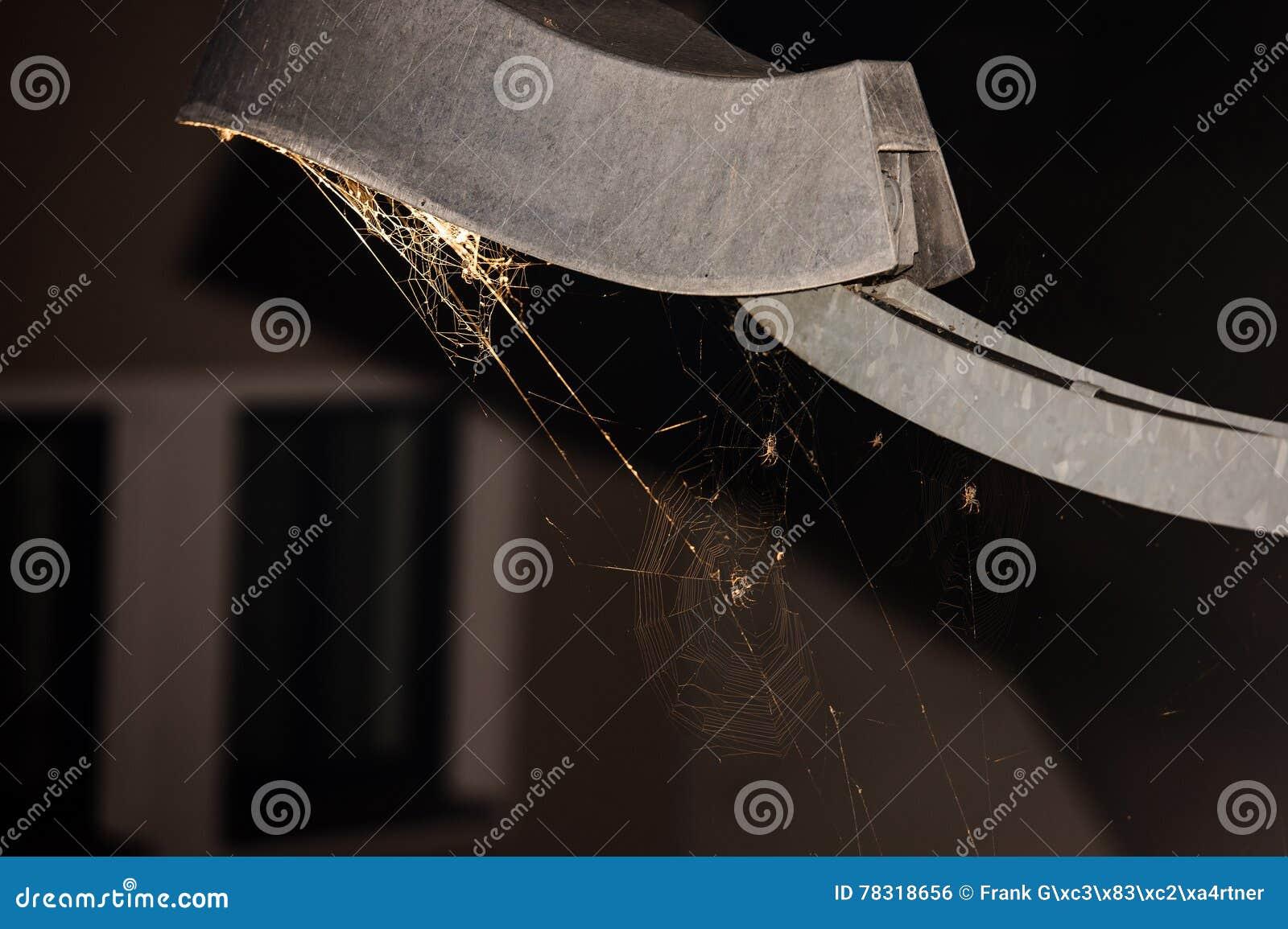 Prendido - Web de aranha sob o revérbero