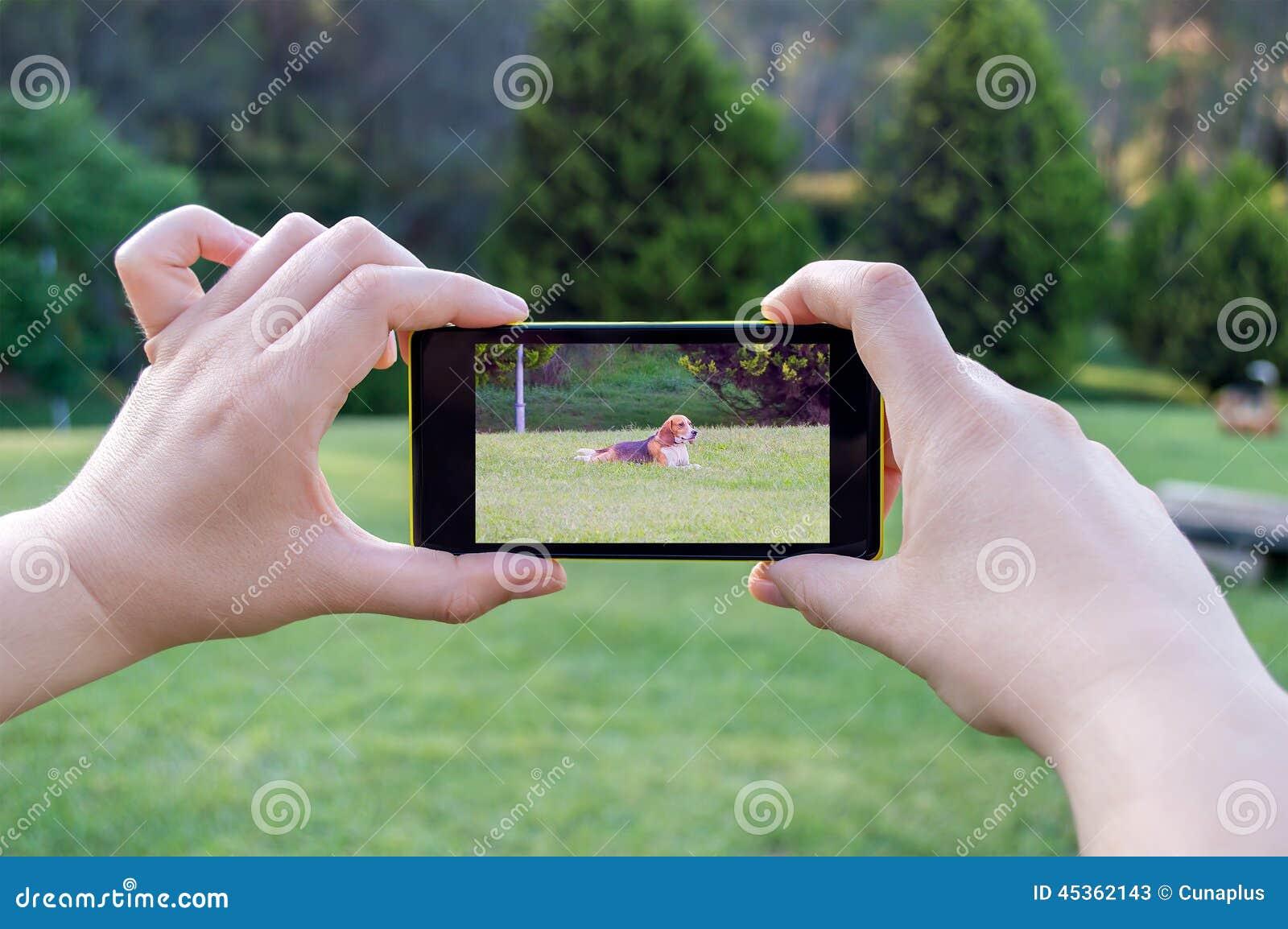 Prendre une photo de votre chien