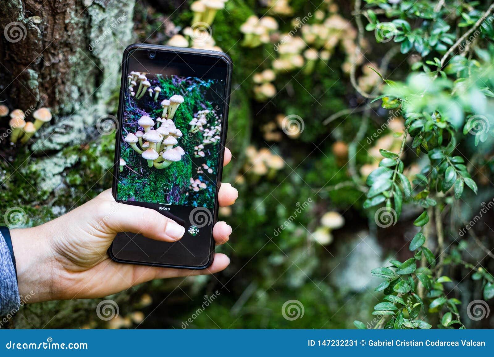 Prendre une photo des champignons avec un téléphone intelligent