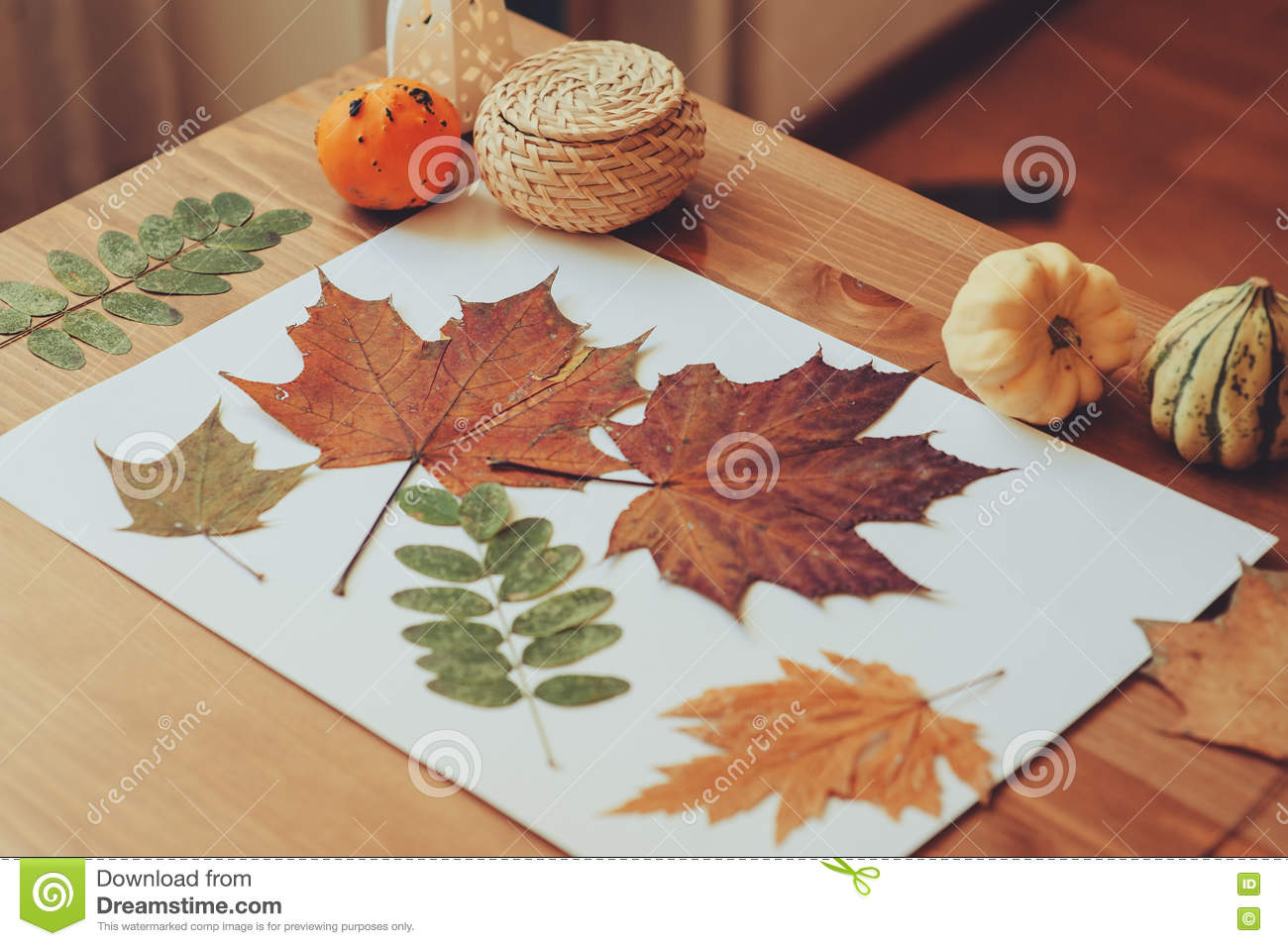 Preparations For Autumn Craft With Kids Herbarium From