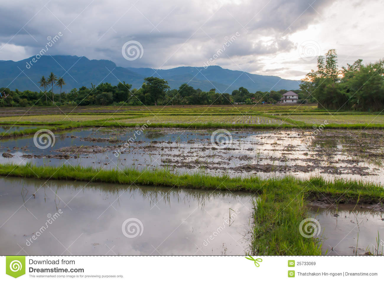 Prepare the soil for rice fields