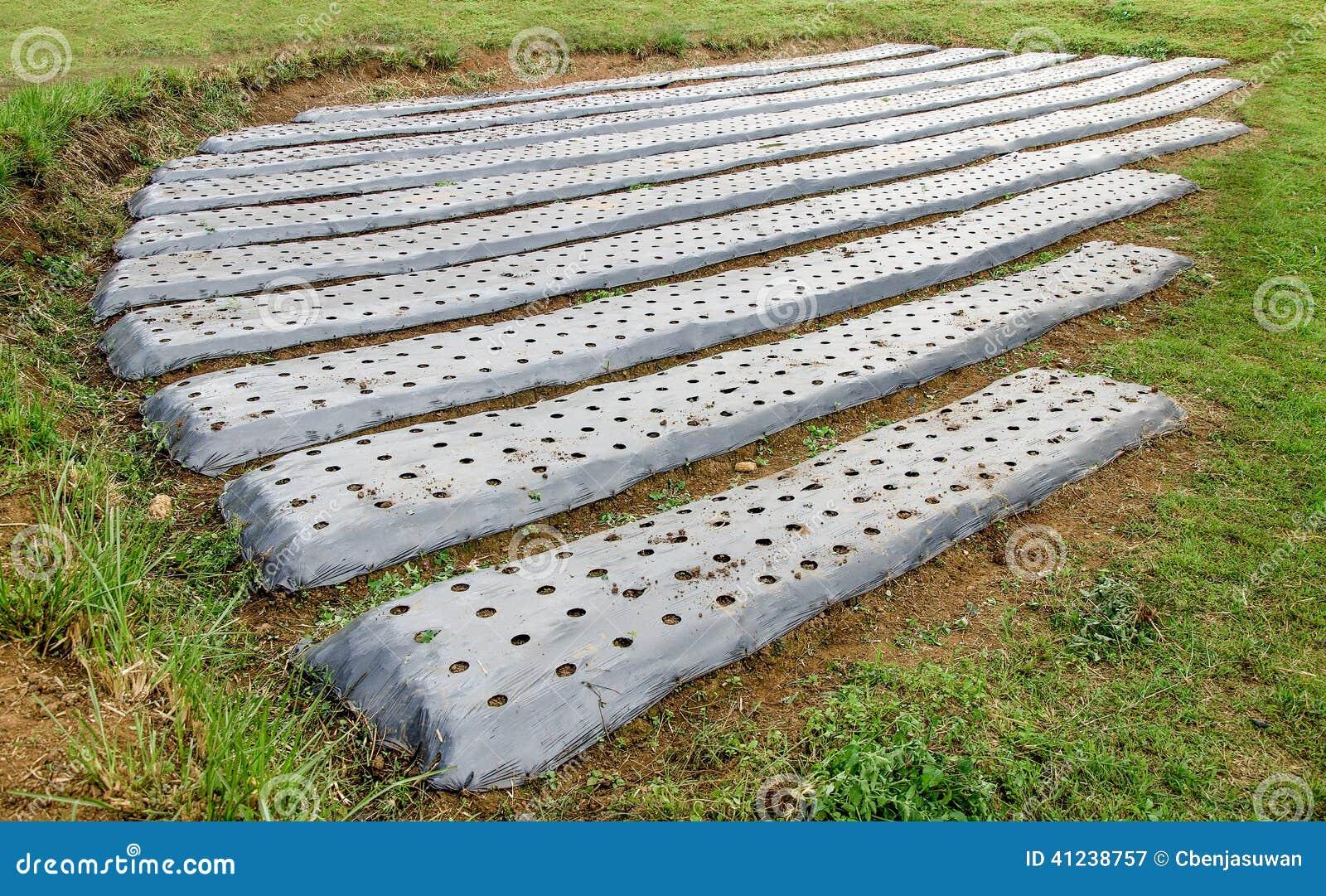 Prepare Soil Of Vegetables Stock Photo Image 41238757