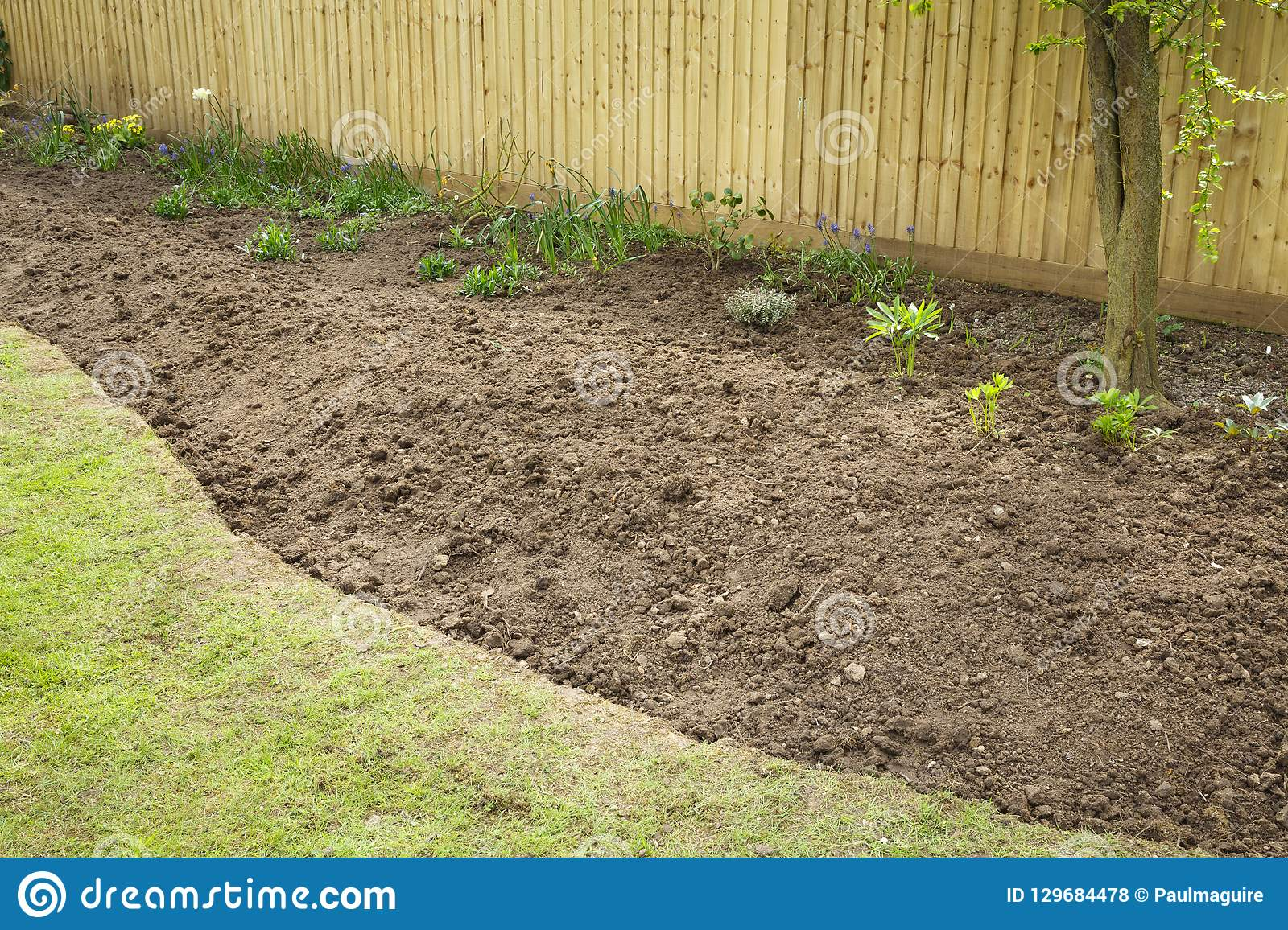 Preparing A Garden Flowerbed For Planting Stock Photo Image Of